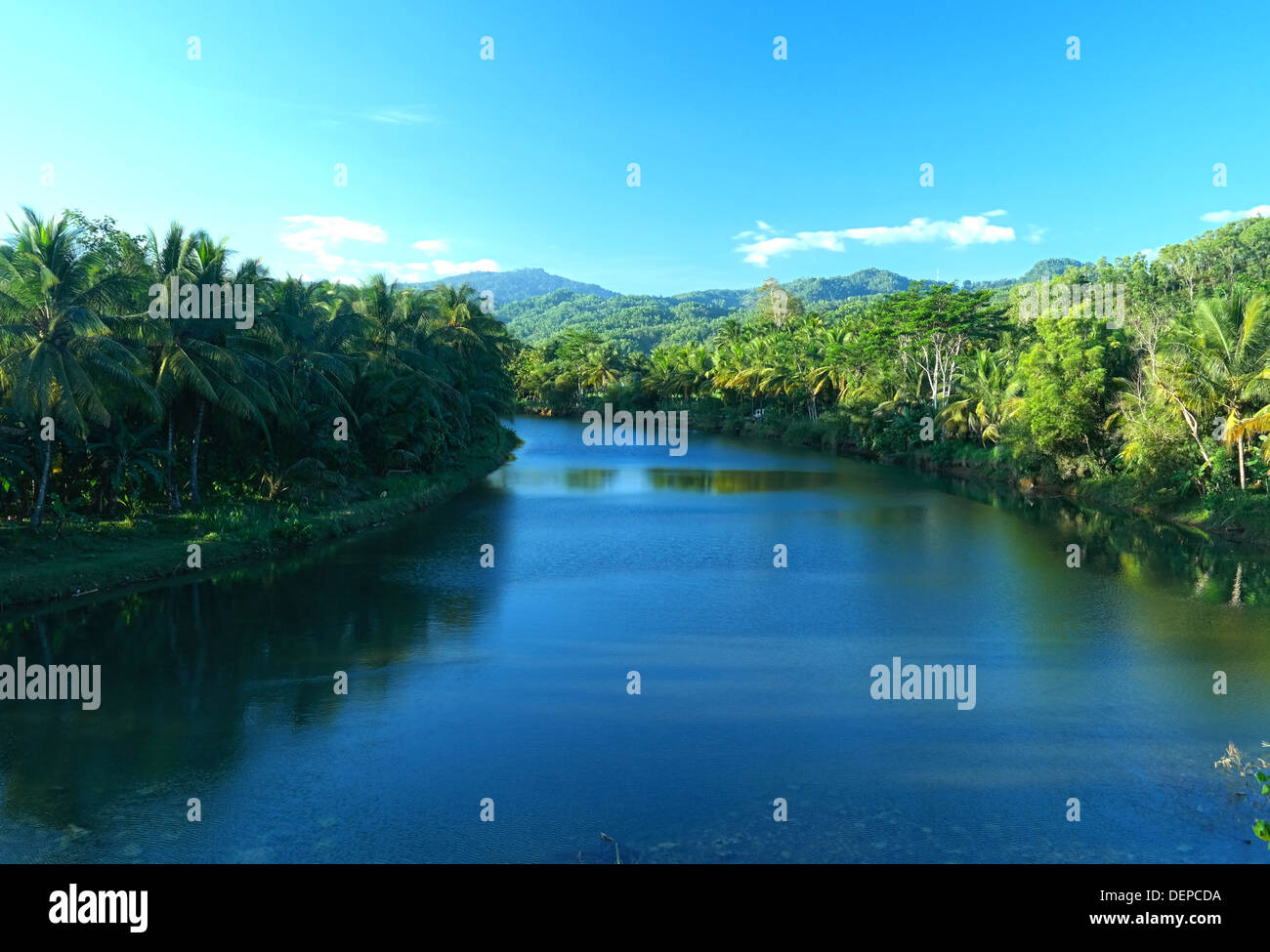 Green River avec tropical forest Photo Stock