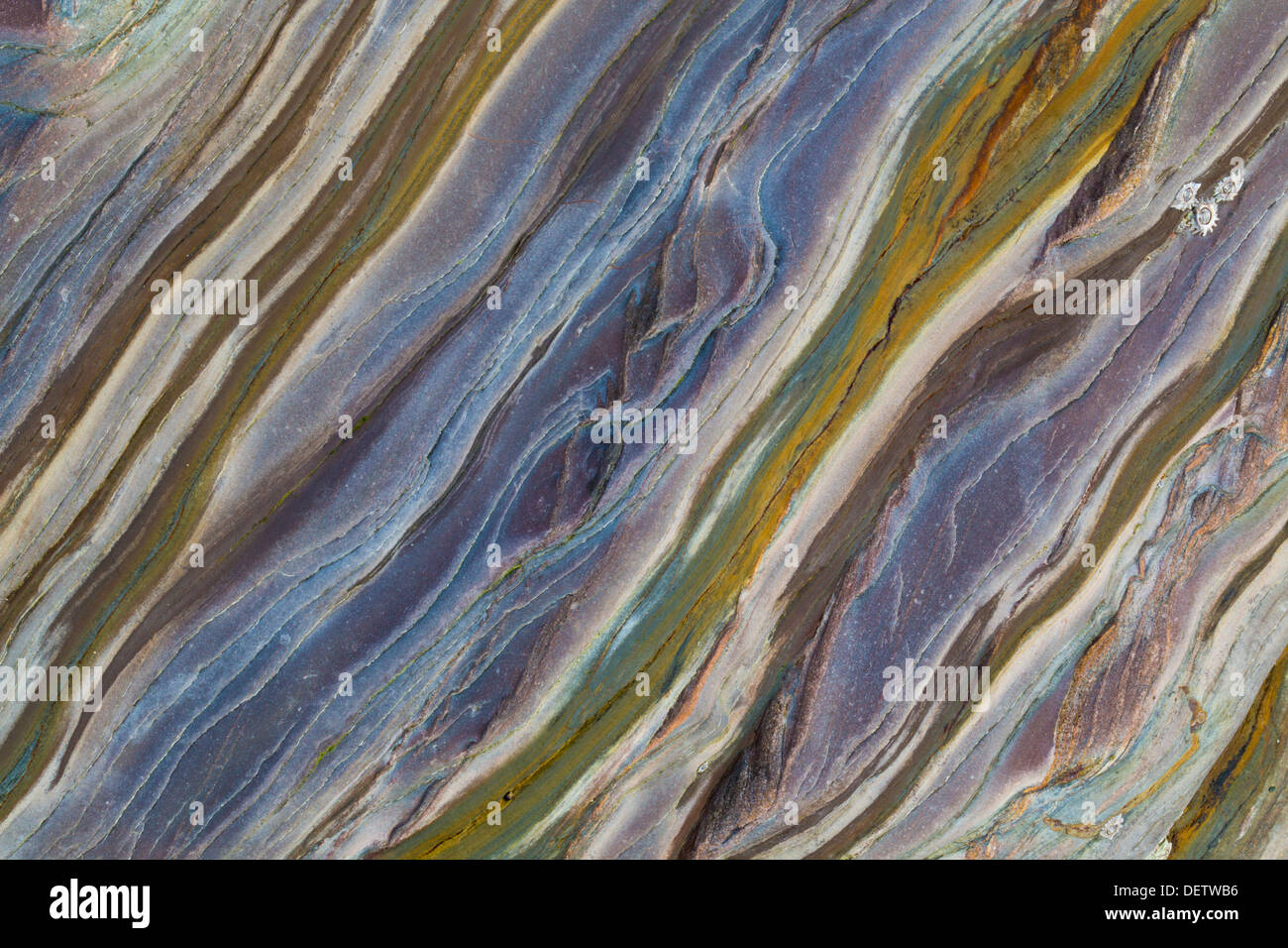 Les modèles d'Ardoise; géologie; Polzeath, Cornwall, UK Photo Stock