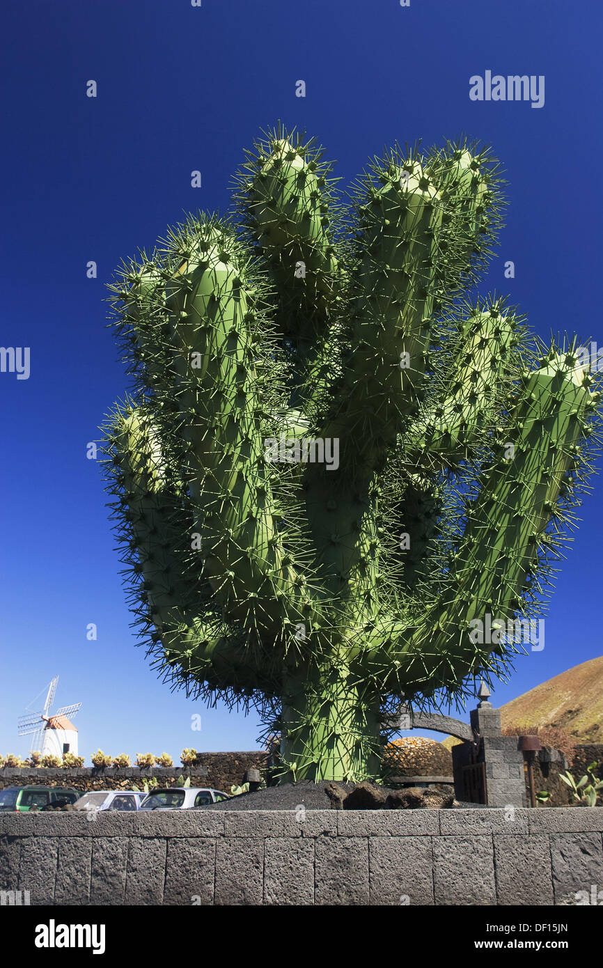 Le jardin de cactus, Lanzarote, îles Canaries, Espagne Banque D'Images
