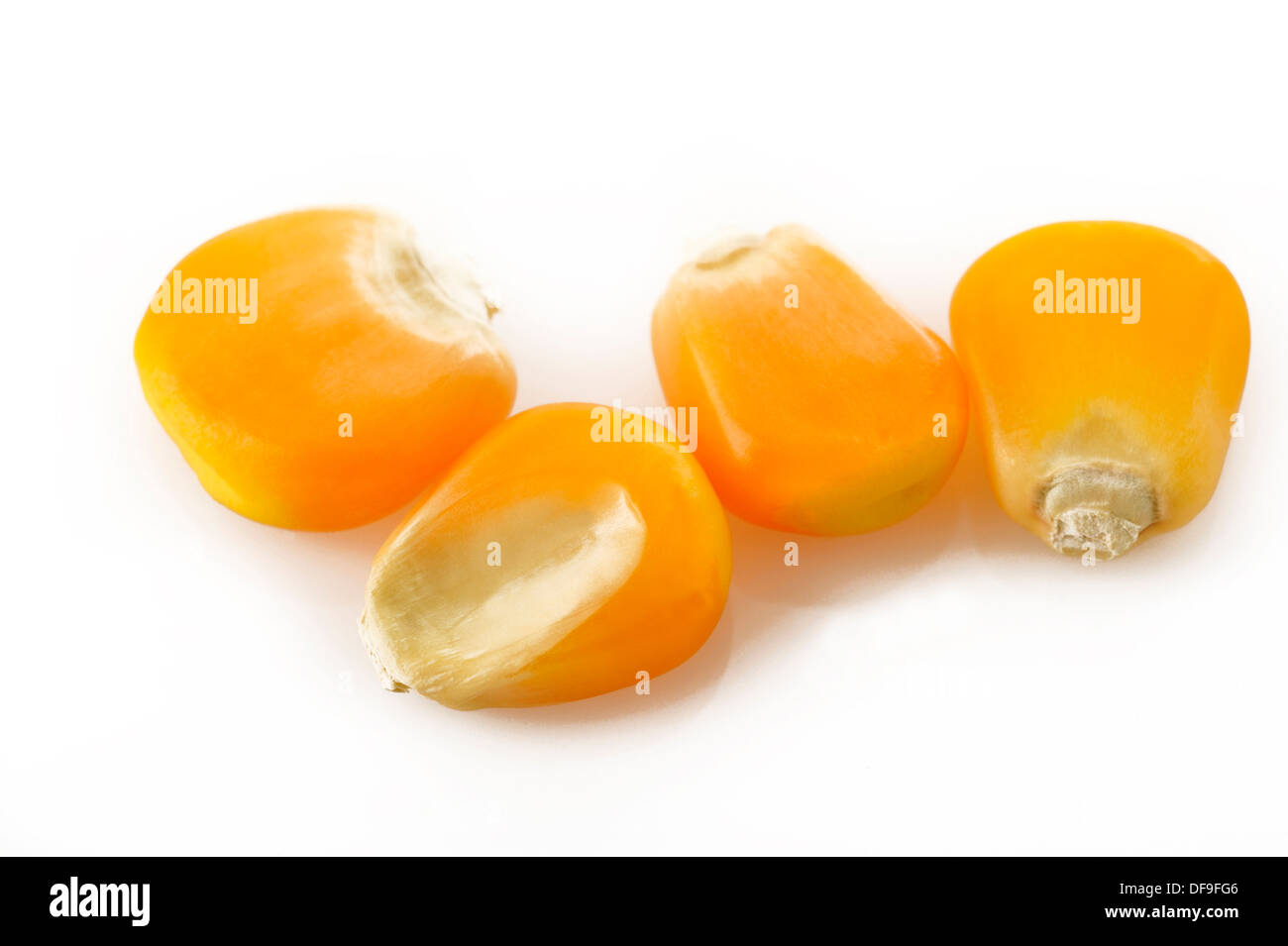 Les graines de maïs sur fond blanc Photo Stock