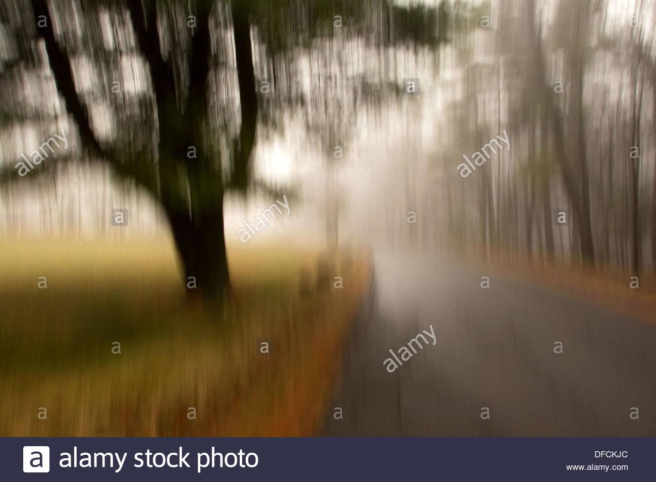 Route de campagne morne Photo Stock