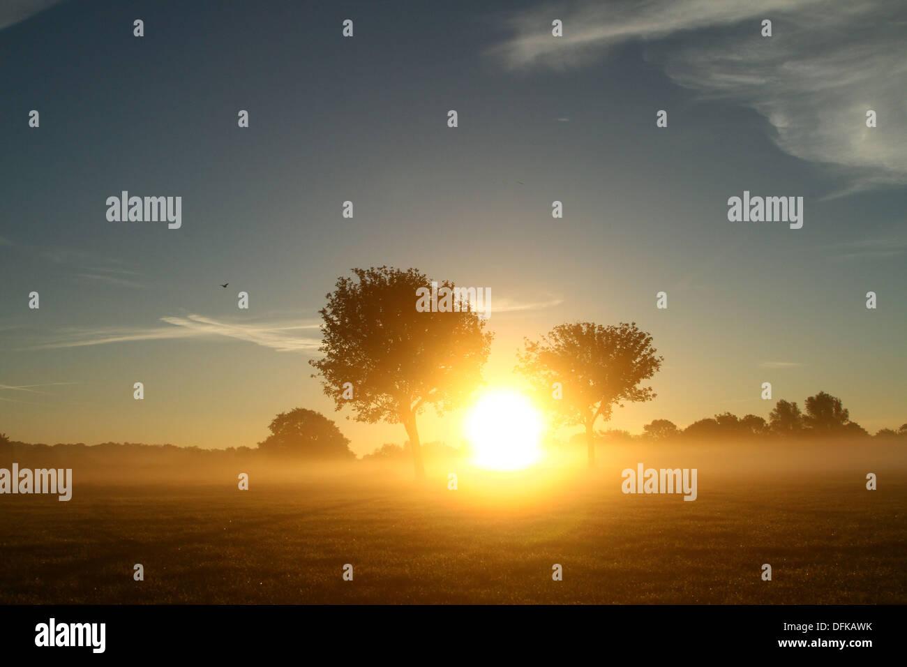 Peterborough (Cambridgeshire, Angleterre. 6 octobre 2013. Tôt le matin de brume à Nene Park derrière ces arbres Banque D'Images
