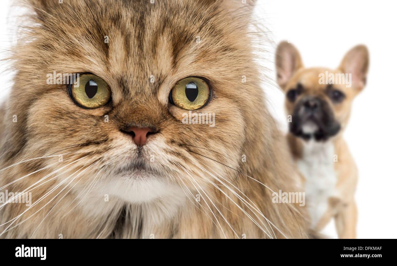 Close-up d'un chat et chien se cacher derrière against white background Photo Stock
