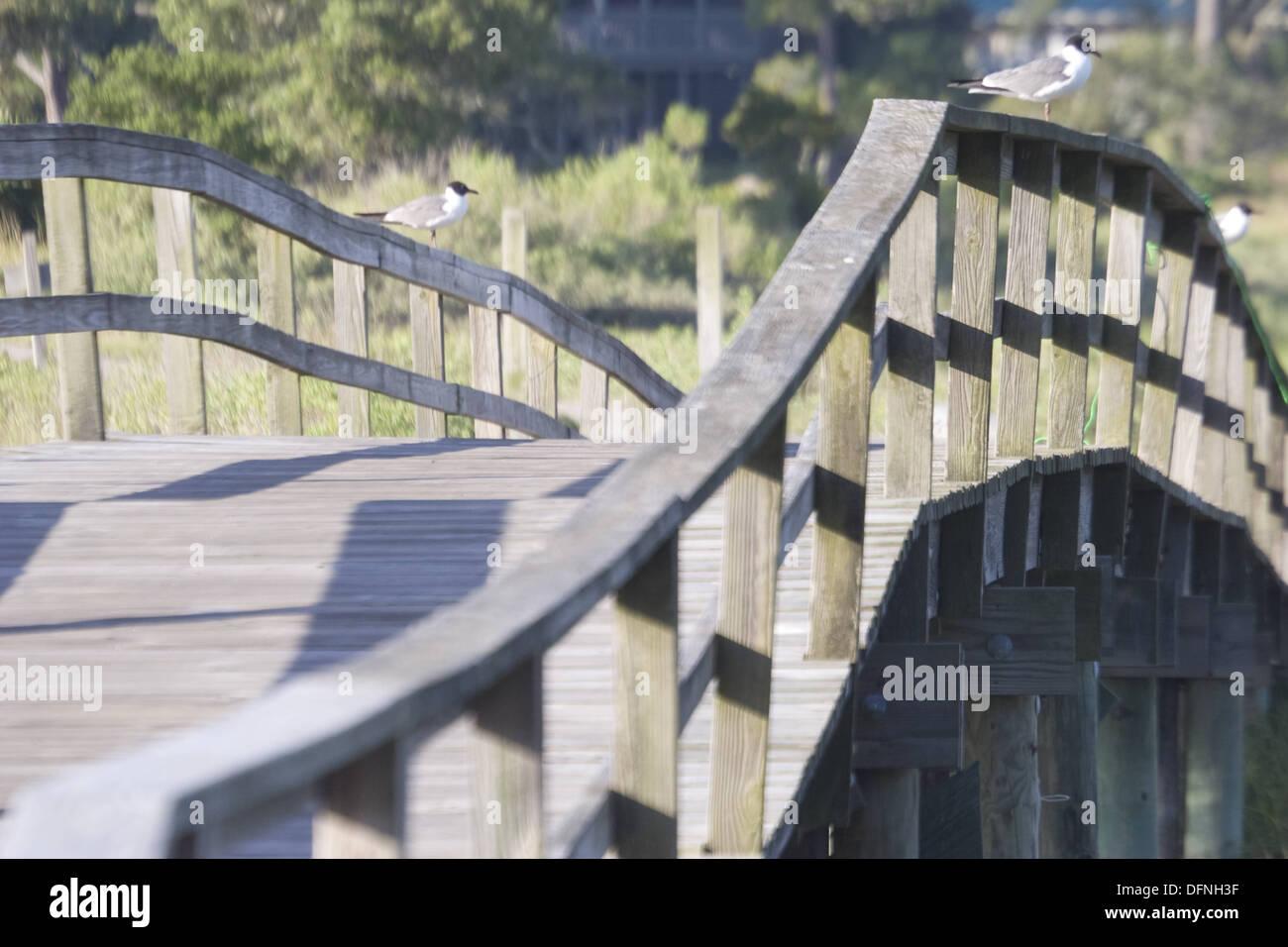 Les oiseaux sur la promenade du marais sur Fripp Island, SC Photo Stock