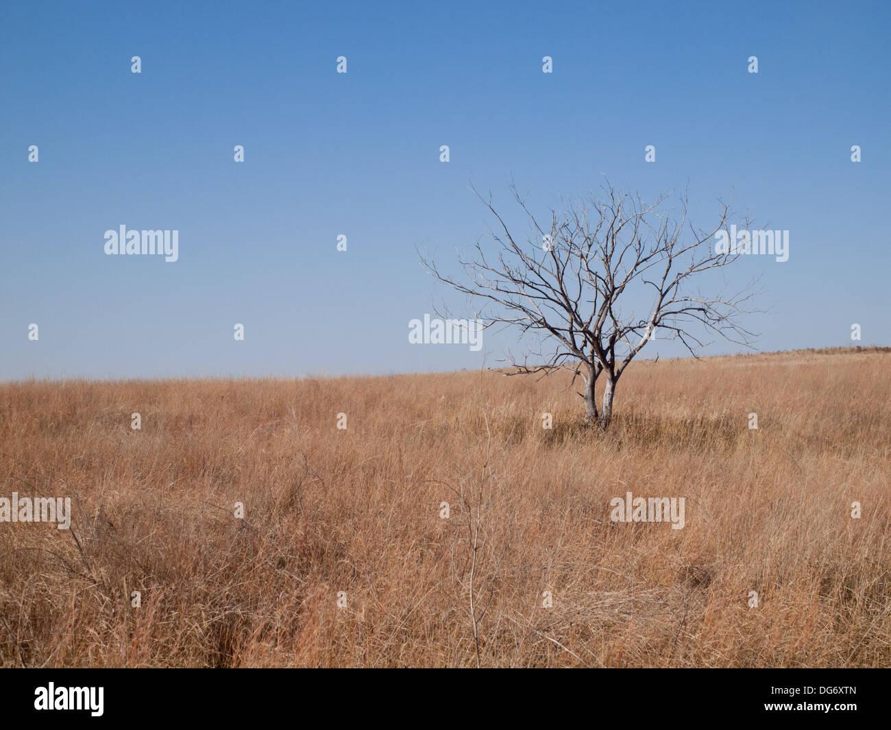 Paysage de prairie naturelle à Beaver Creek Conservation Area, près de Saskatoon, Saskatchewan, Canada. Photo Stock