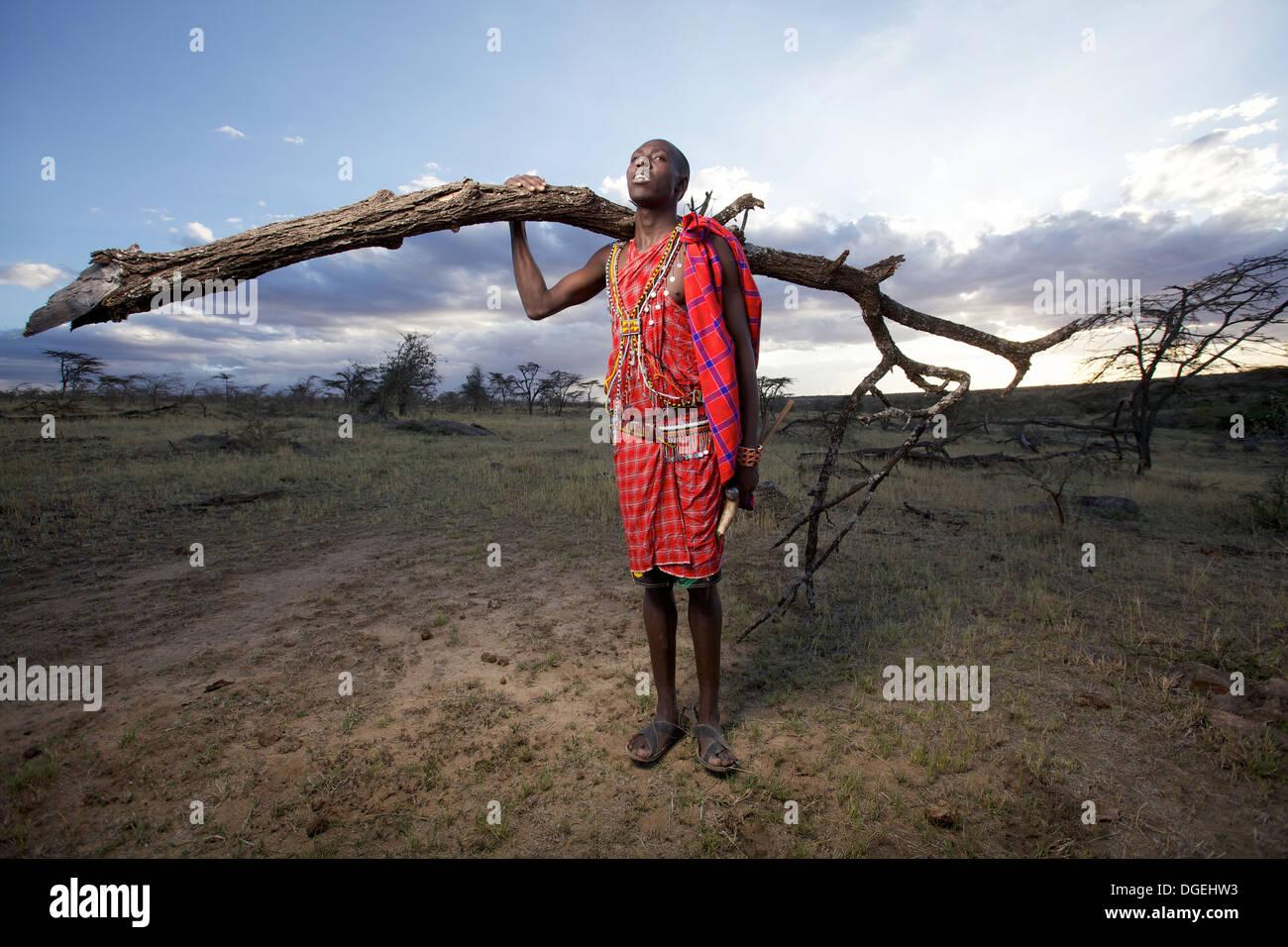 Homme massaï la collecte de bois de feu dans la région de Mara, Kenya, Photo Stock