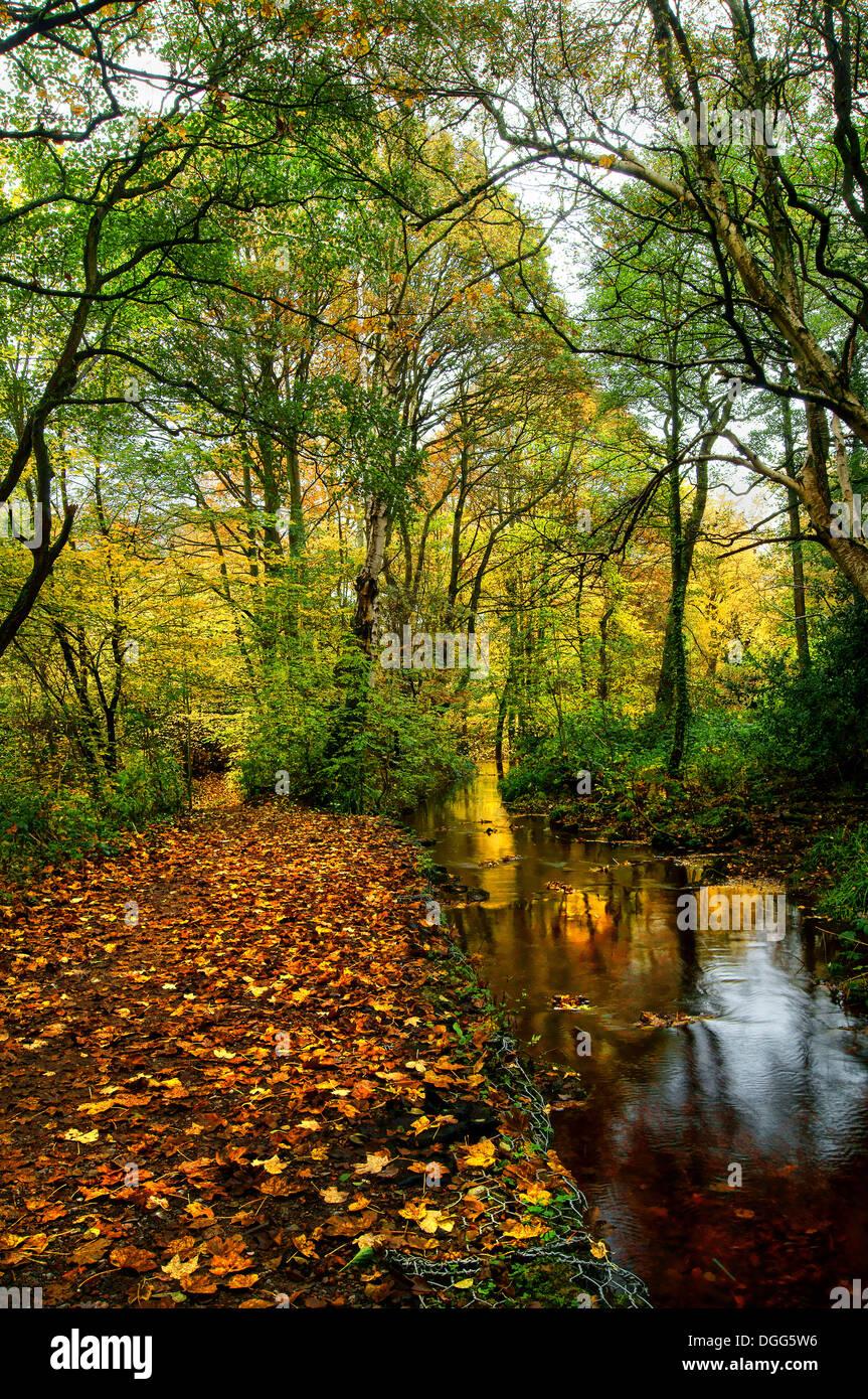 UK,South Yorkshire,Sheffield Rivelin Valley,Rivière,promenade Woodland & Rivelin Banque D'Images
