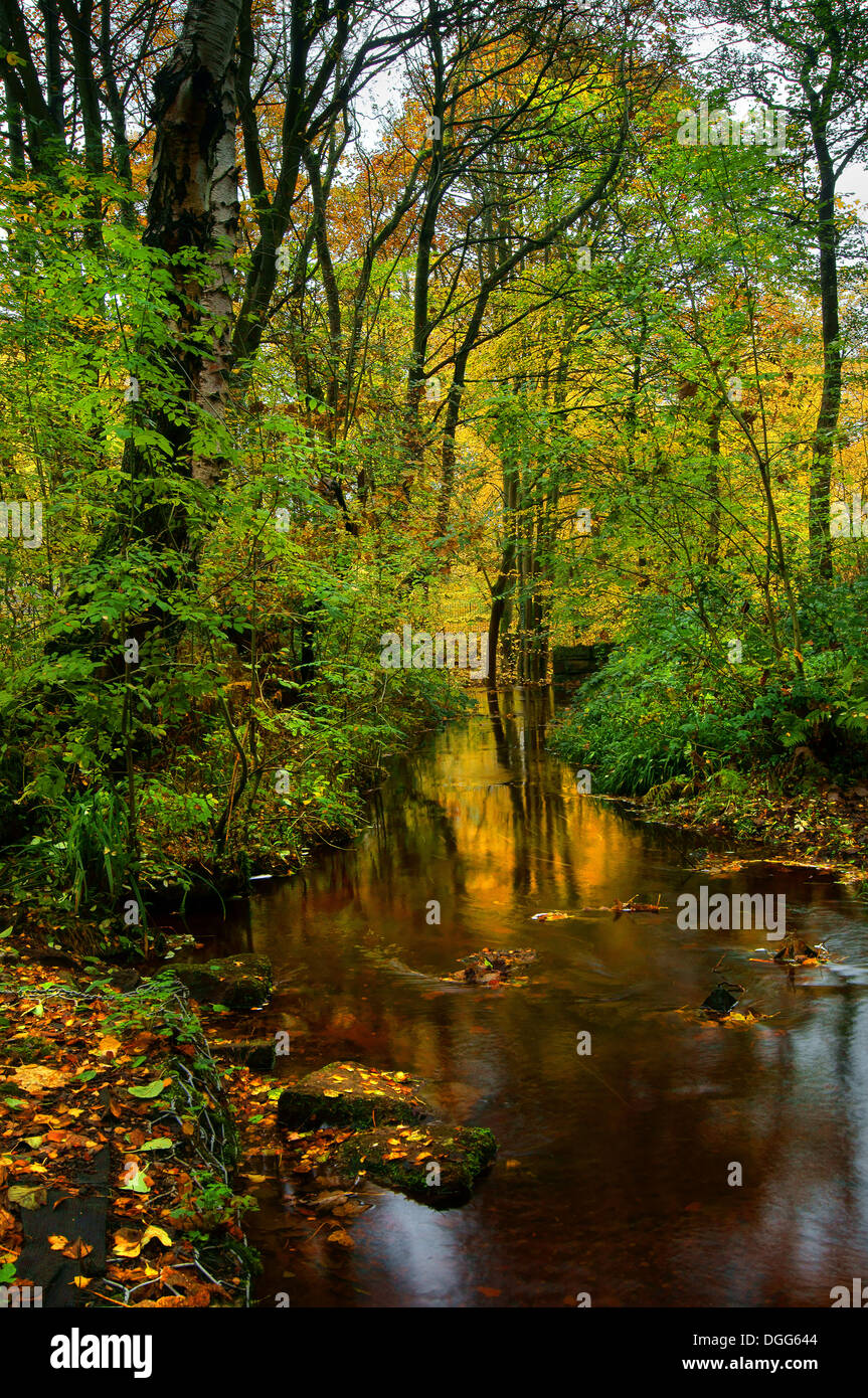UK,South Yorkshire,Sheffield Rivelin Valley,Rivière,promenade Woodland & Rivelin Banque D'Images