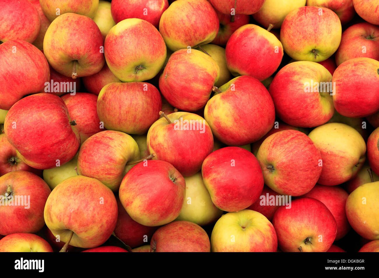 La pomme 'Elstar' dans la boutique de la ferme, l'affichage choisi bac pommes récoltées Photo Stock