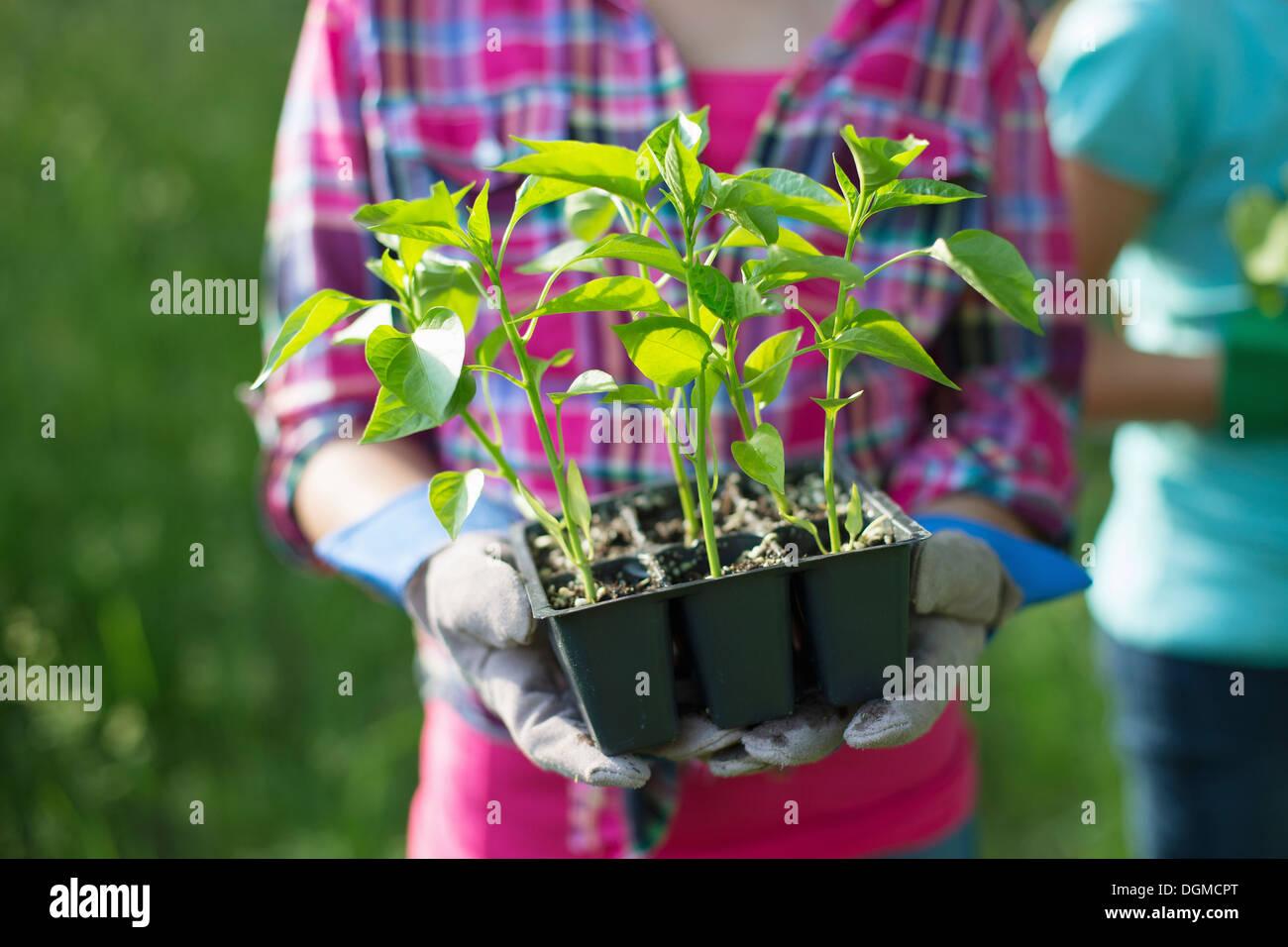 Ferme biologique. Fête de l'été. Une jeune fille tenant un plateau de jeunes plantules enracinées. Photo Stock