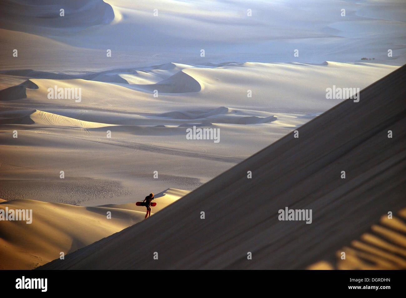 Sandboarder l'ascension d'une immense dune de sable avec son bureau, désert d'Atacama, oasis huacachina près d'Ica, Banque D'Images