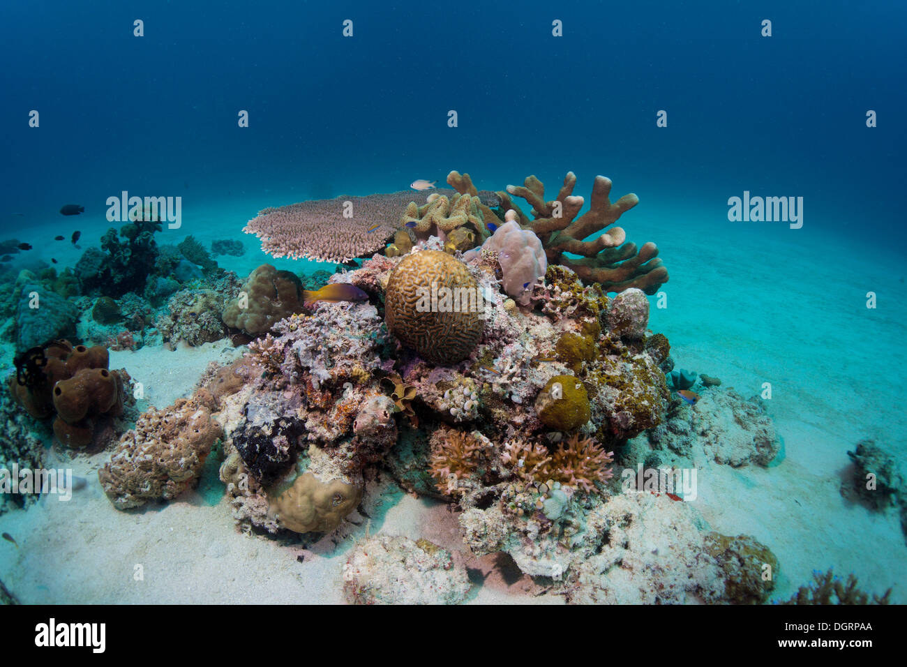 Les récifs coralliens intacts dans les eaux peu profondes de la lagune, Busuanga, Grande Barrière de Corail, Philippines Photo Stock