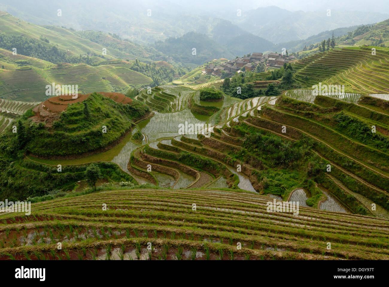 """Des célèbres rizières en terrasse de Longji 'épine dorsale du Dragon"""" ou """"vertèbre de the dragon' pour la culture du riz paddy, Dazhai, Ping'an Photo Stock"""