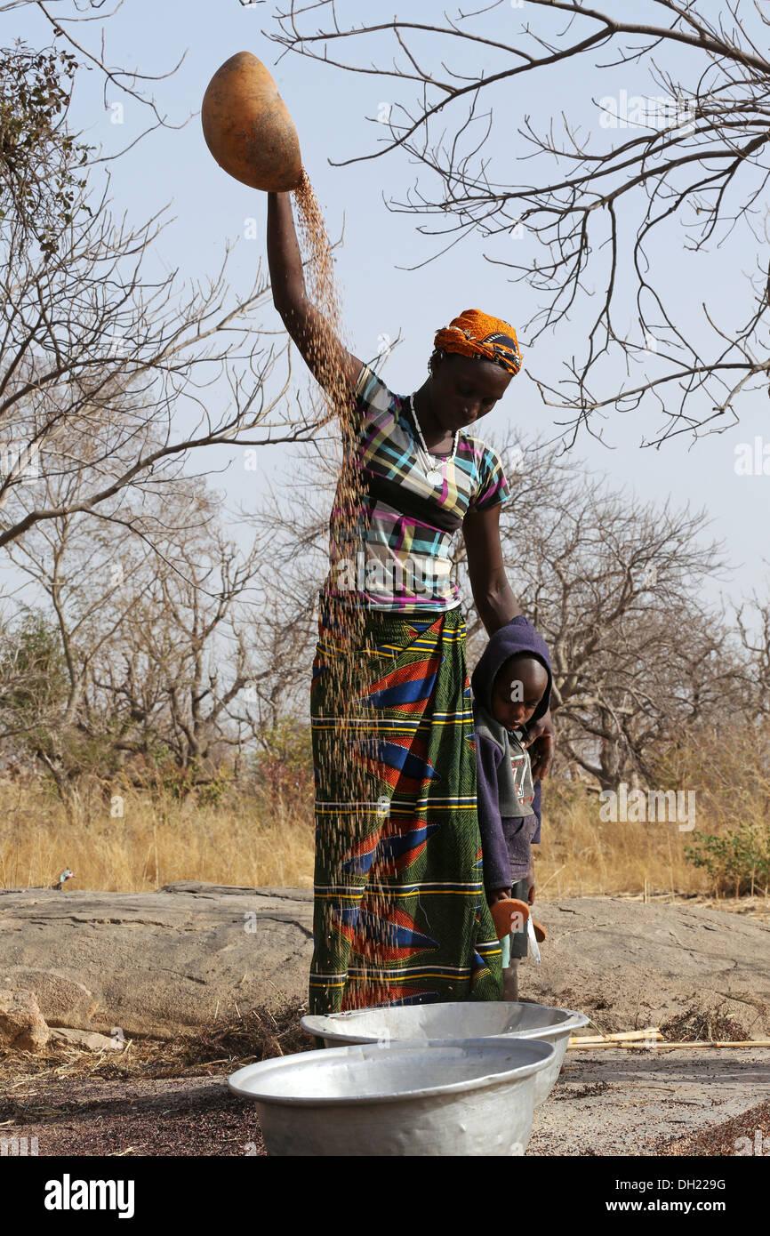 Les femmes vanner Le Sorgho, Millet après la récolte, le Burkina Faso Photo Stock