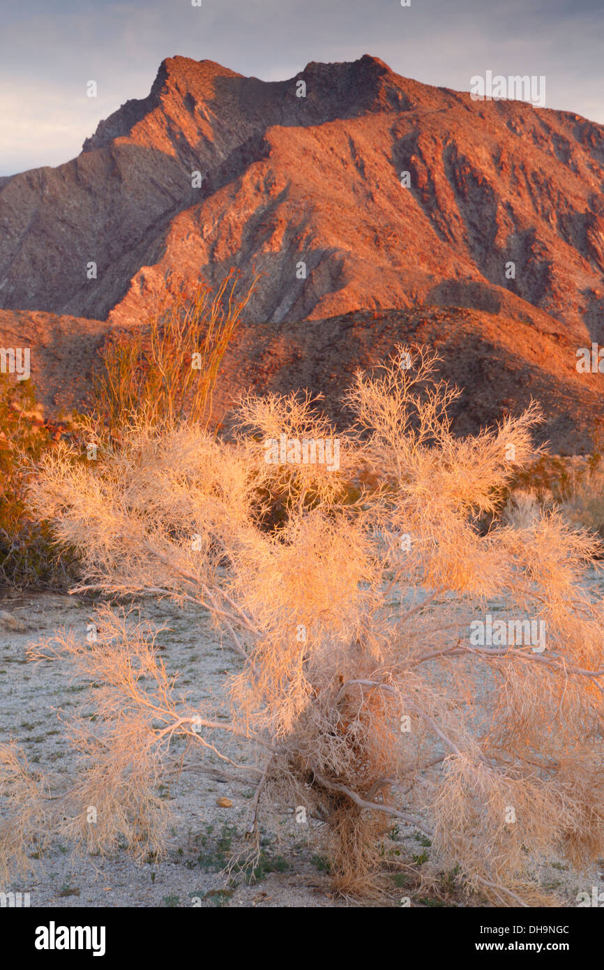 Anza-Borrego Desert State Park, Californie. Photo Stock