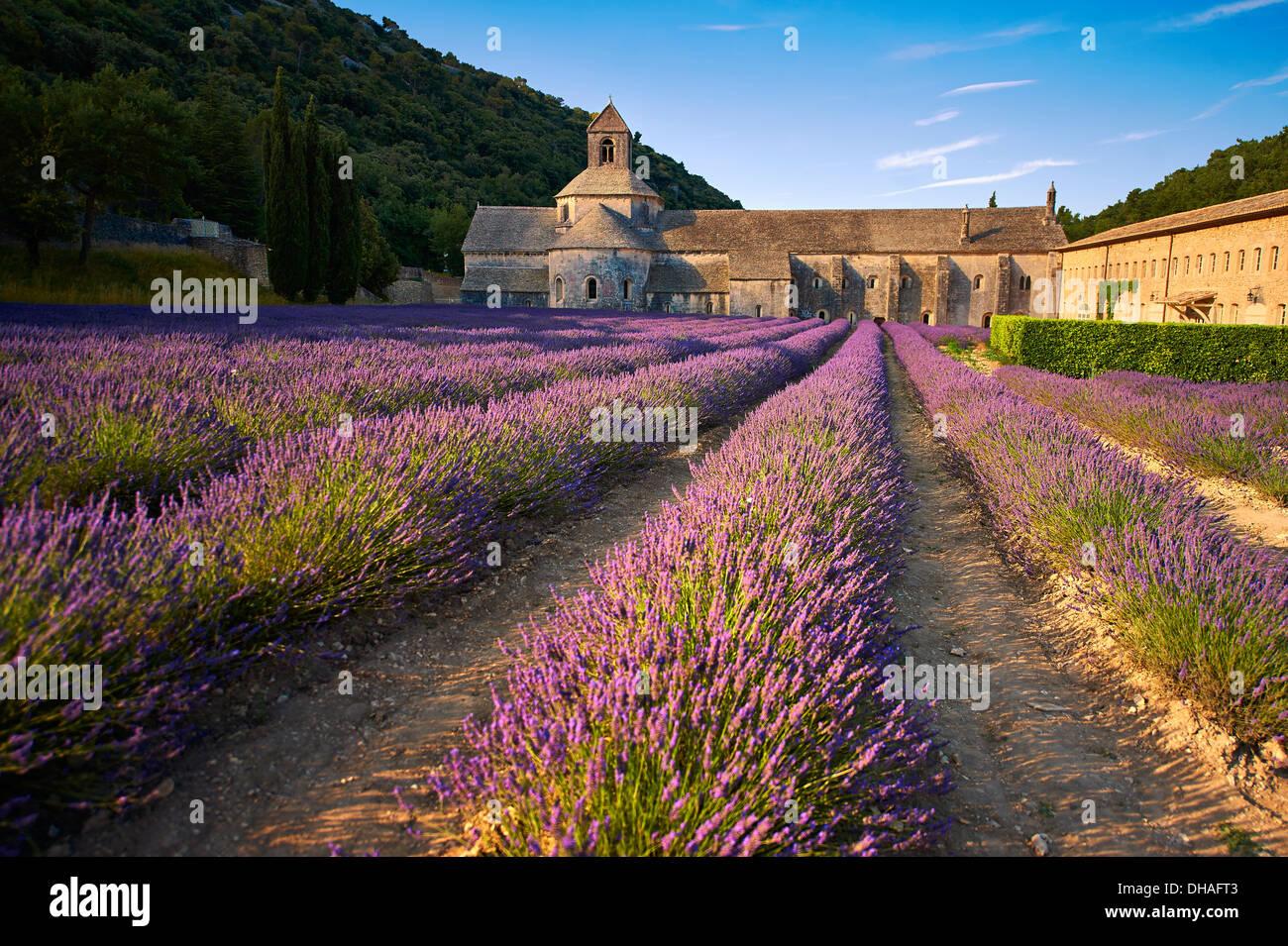 L'Abbaye cistercienne romane du xiie siècle de Notre-Dame de Sénanque, dans les champs de lavande en fleurs de la Provence. Photo Stock