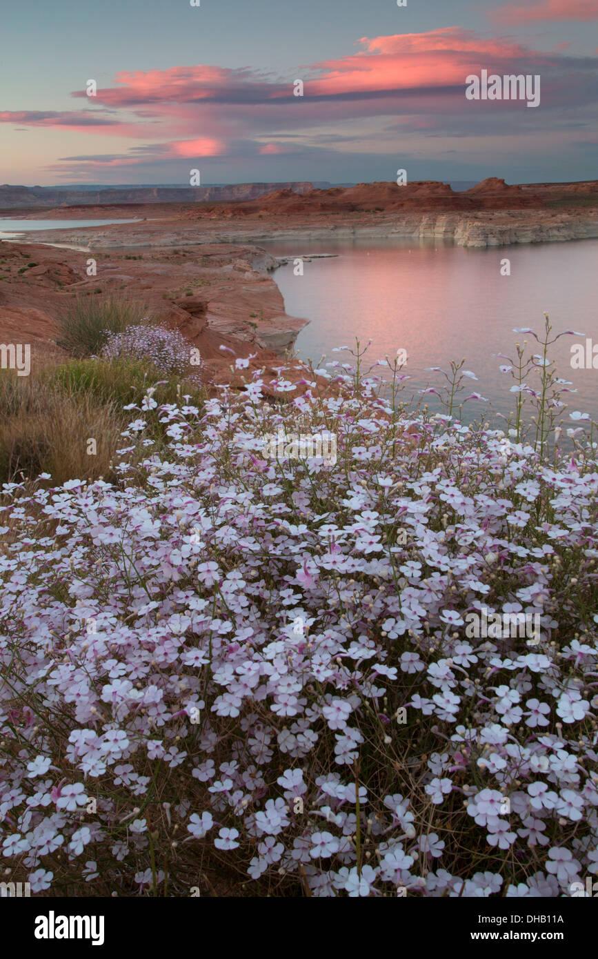 Lake Powell, Glen Canyon National Recreation Area, Arizona. Photo Stock