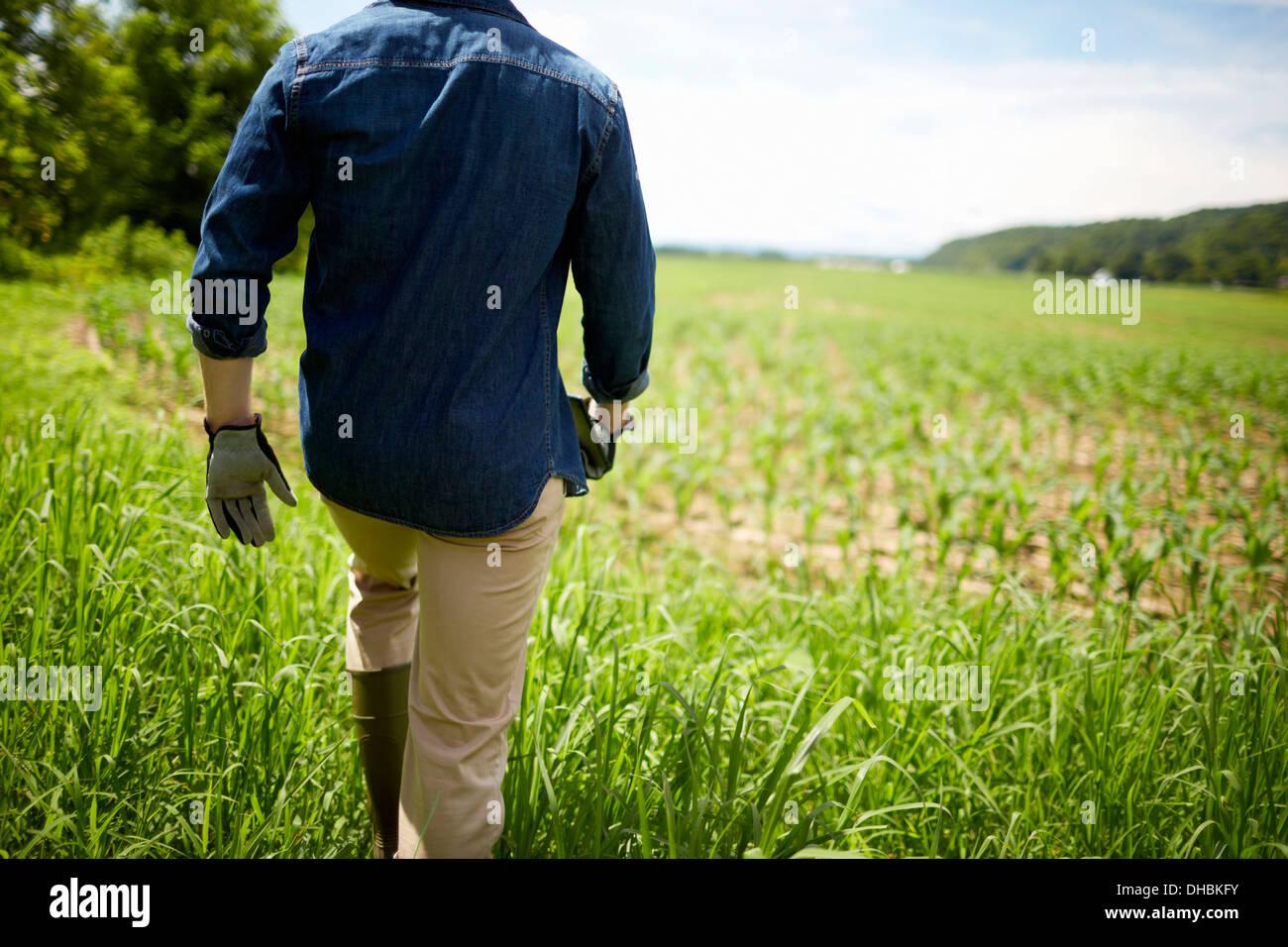 Un agriculteur travaillant dans ses champs, dans l'État de New York, USA. Photo Stock
