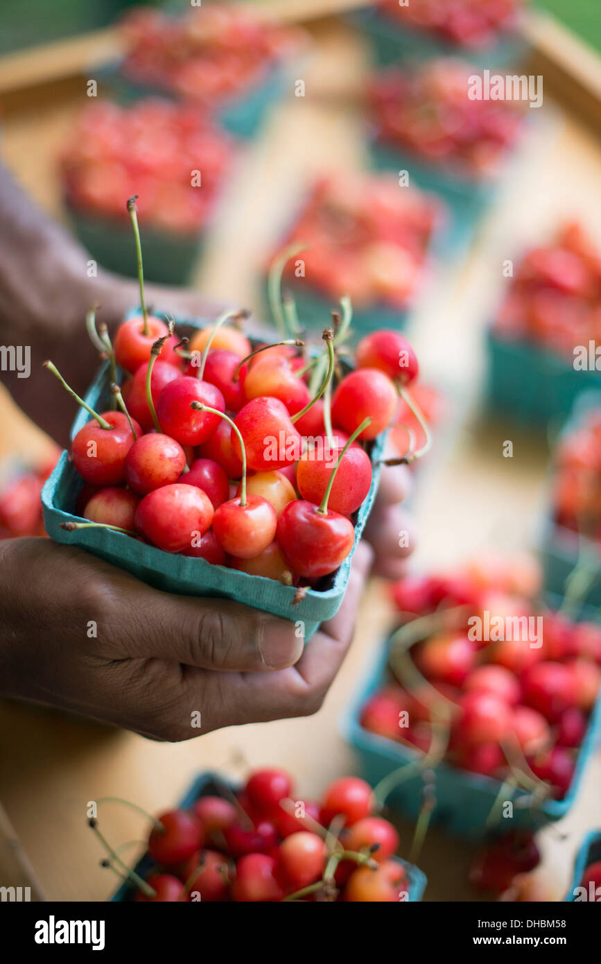 Les fruits biologiques affichés sur un support ferme. Les cerises dans des barquettes. Banque D'Images