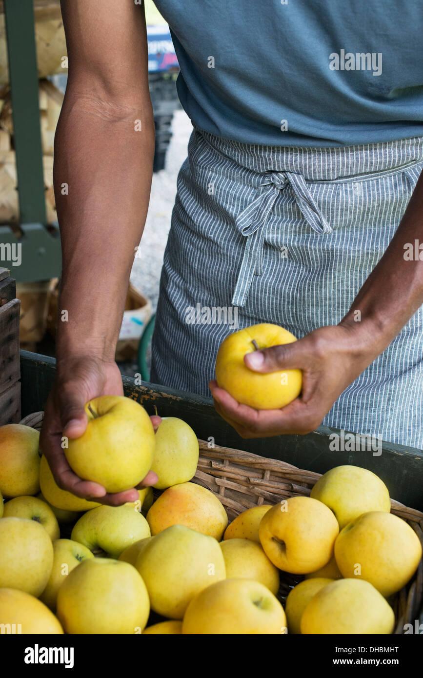 L'agriculture biologique. Un homme l'emballage des pommes fraîches. Photo Stock