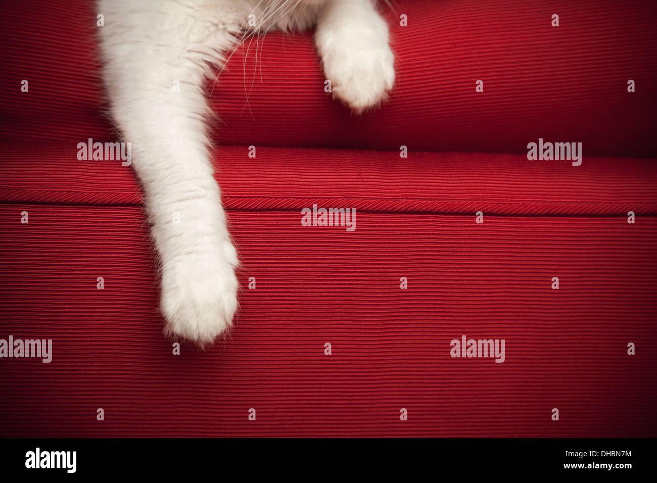 Un chaton sur un canapé rouge. Vue sur les pattes avant et patte. Photo Stock