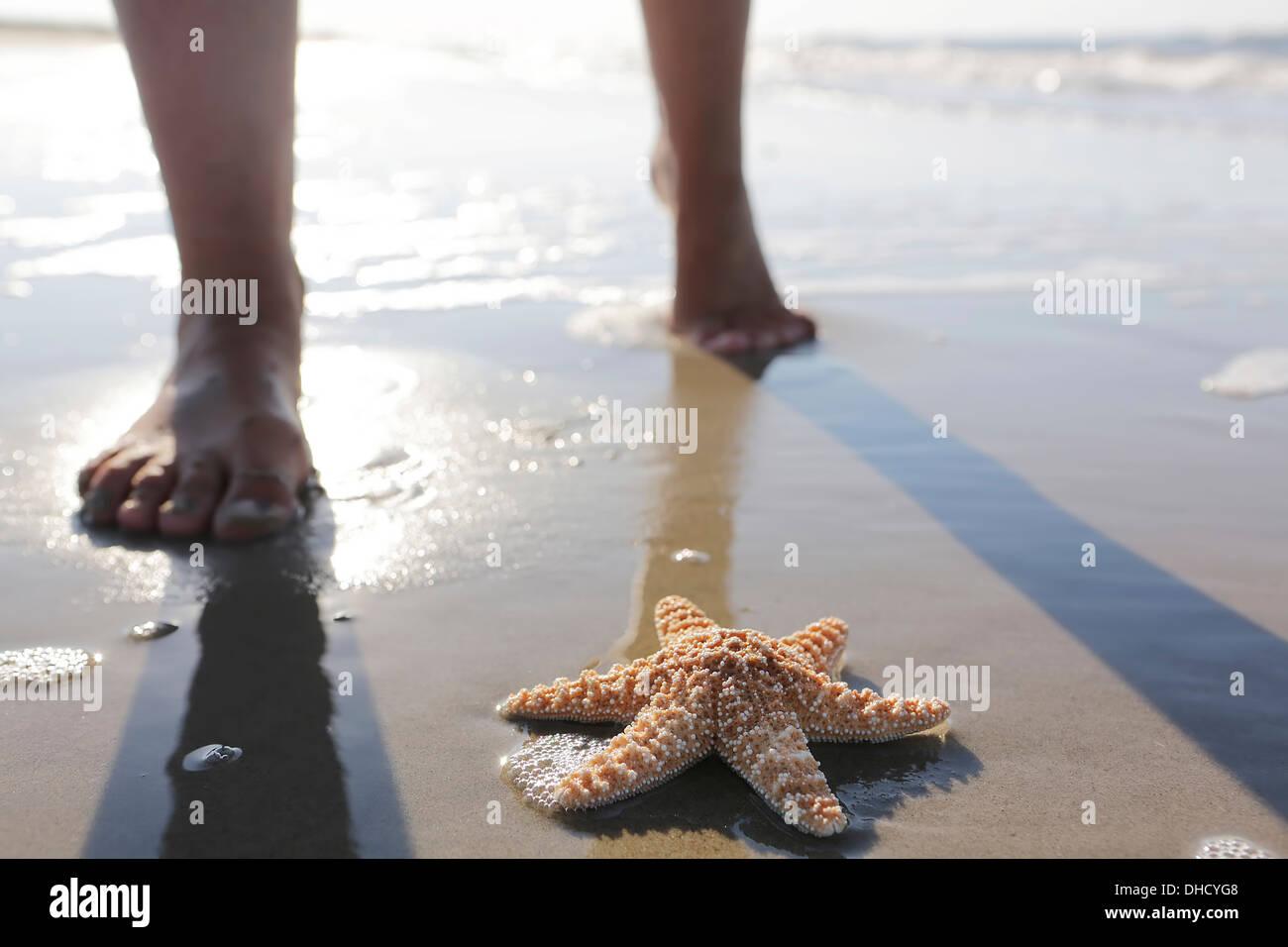 Allemagne, Basse-Saxe, Frise Orientale, Langeoog, poissons de mer et les pieds d'une femme à la plage Photo Stock