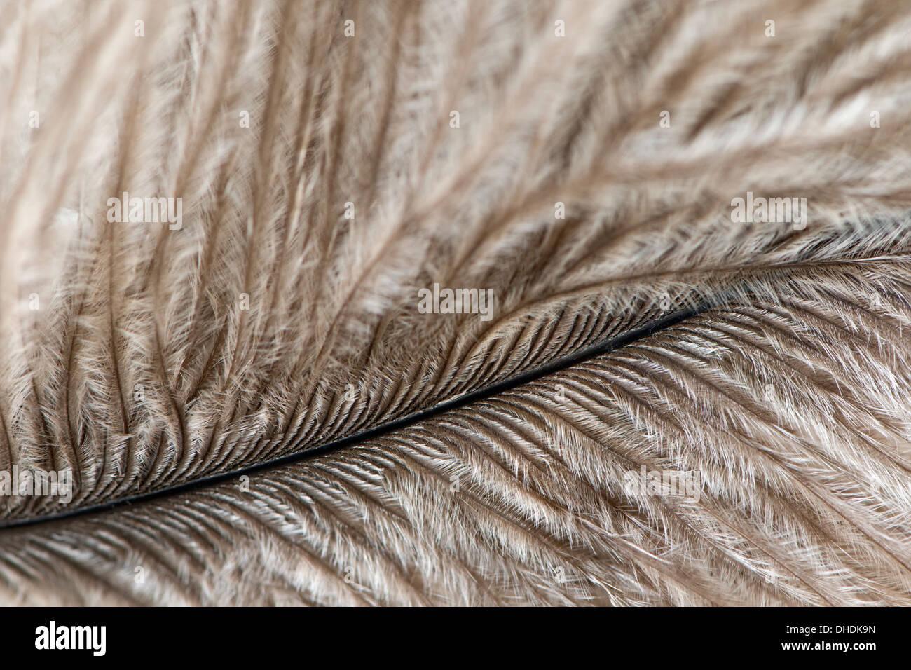 Close up de plume d'oiseau Photo Stock