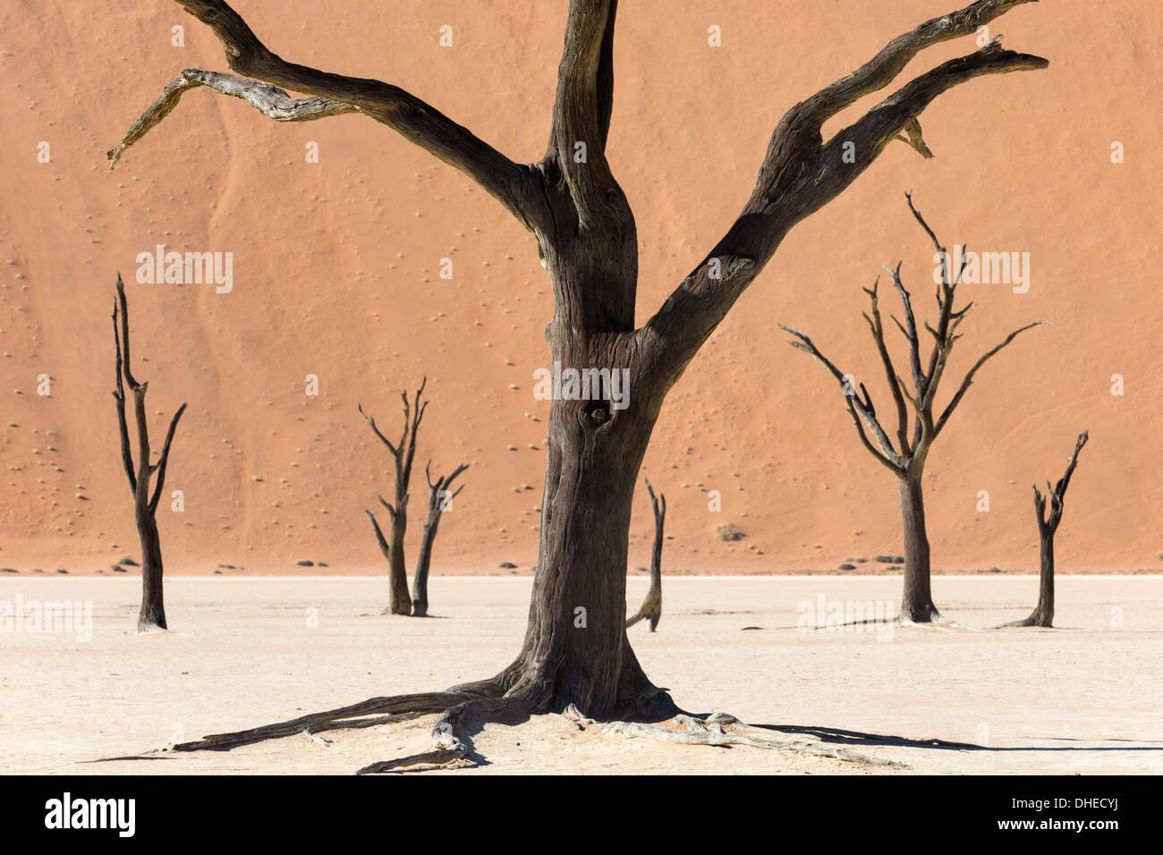 Dead Vlei, Désert du Namib, Namibie, Afrique Photo Stock
