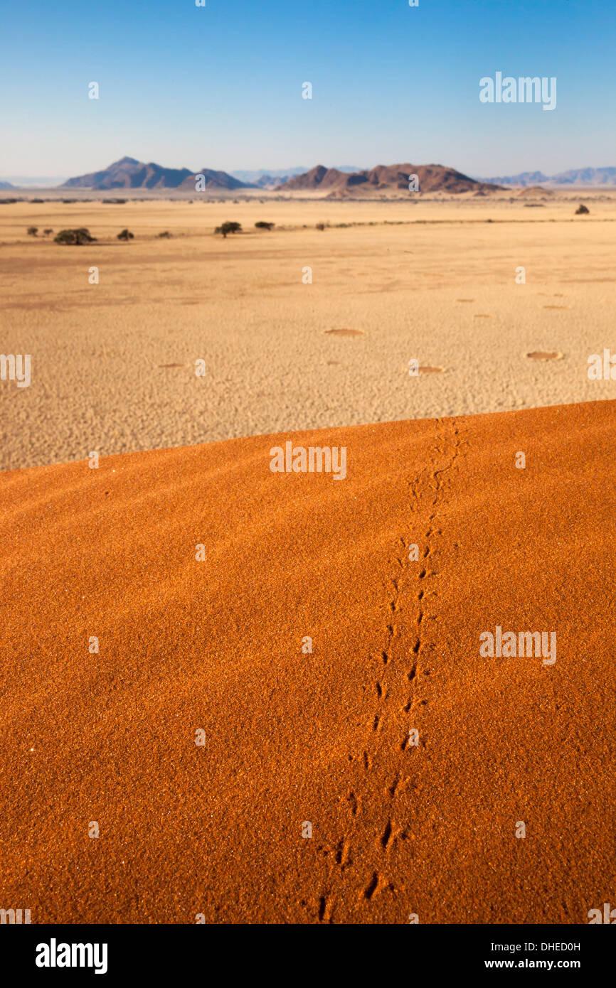 Des pistes d'animaux dans le sable, le désert de Namib, Namibie, Afrique Photo Stock