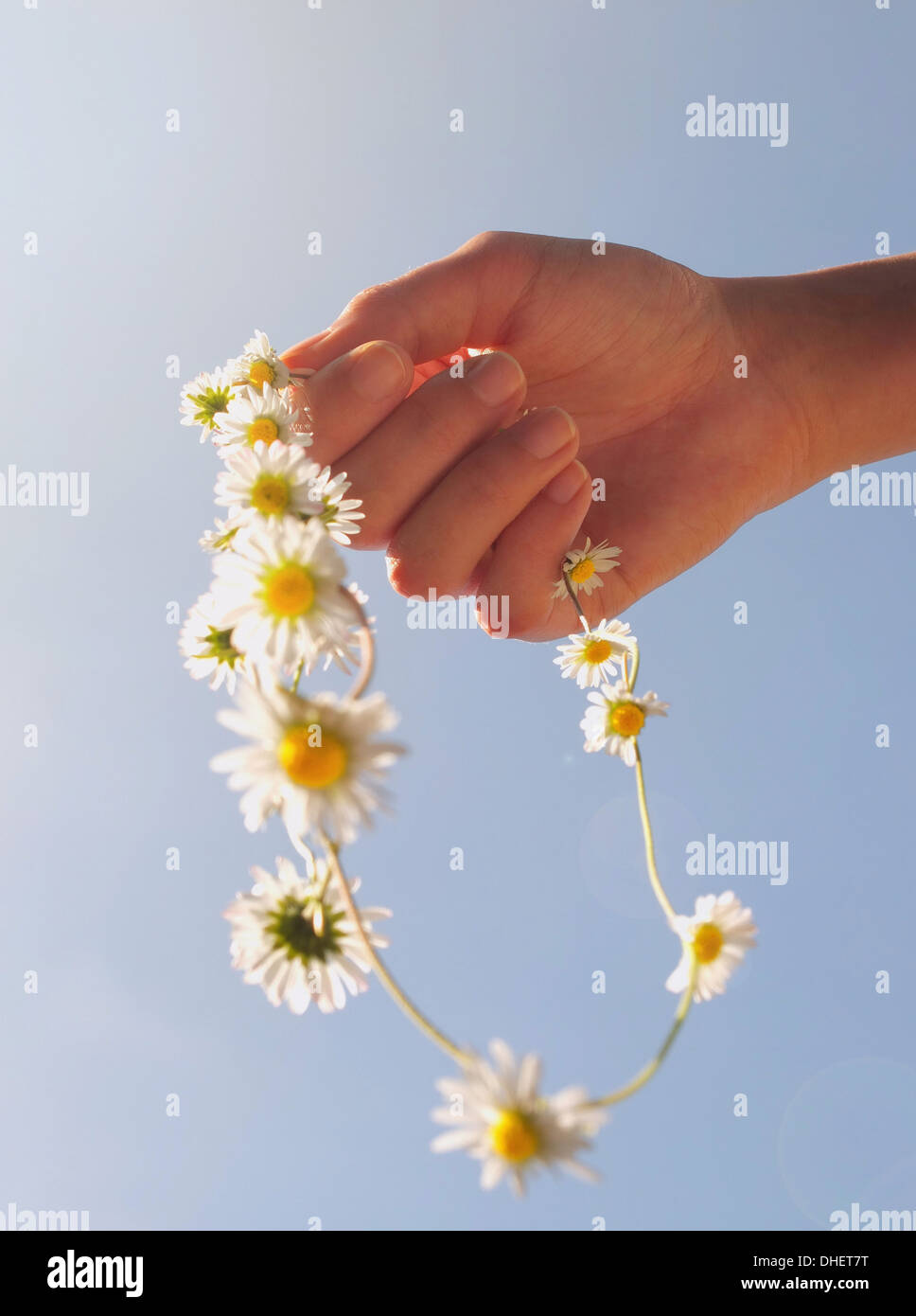 Cropped hand holding daisy chain Photo Stock