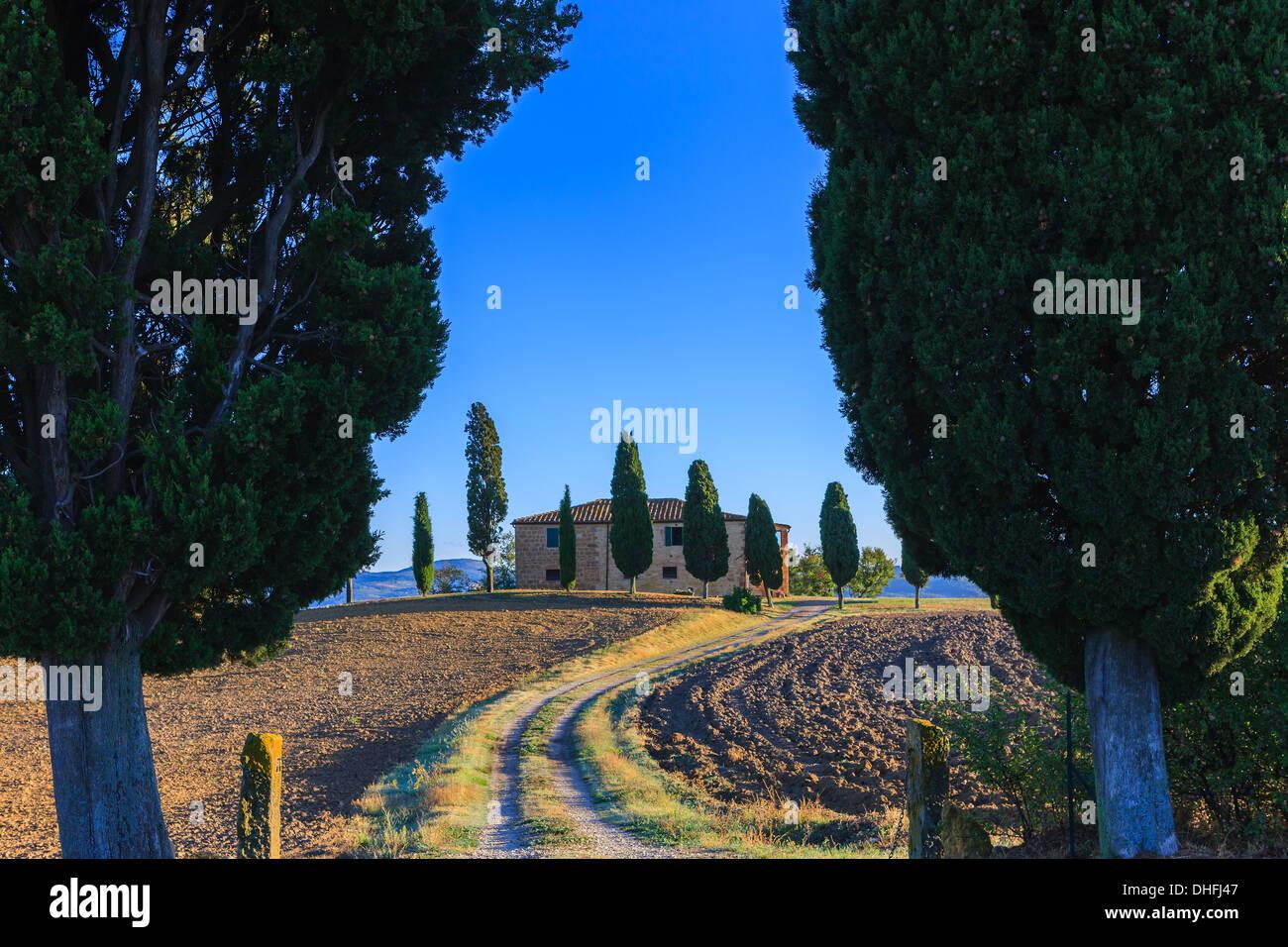 Maison avec le célèbre cyprès au coeur de la Toscane, près de Pienza, Italie Photo Stock