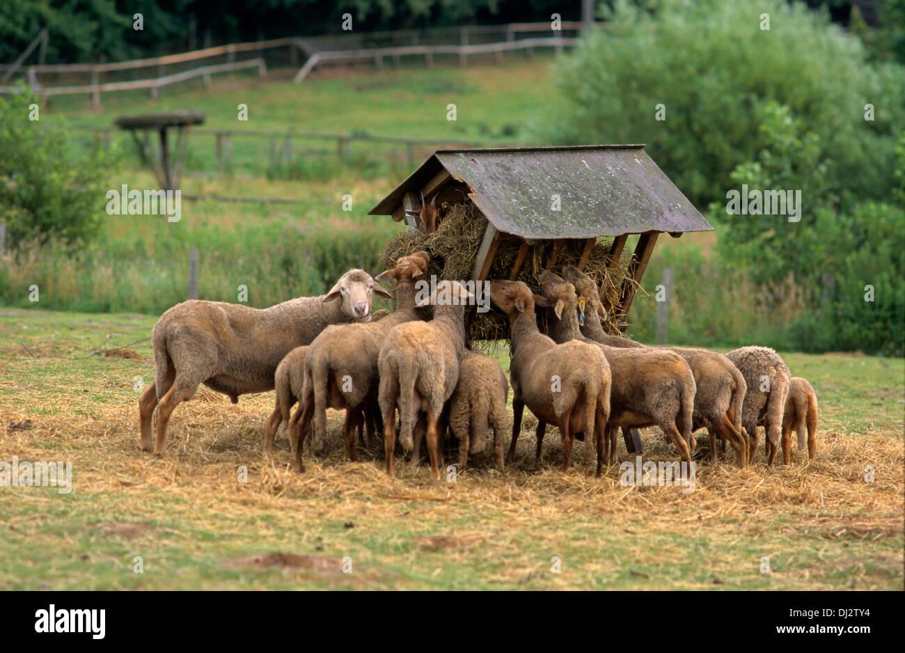 le troupeau datant Oneonta datant