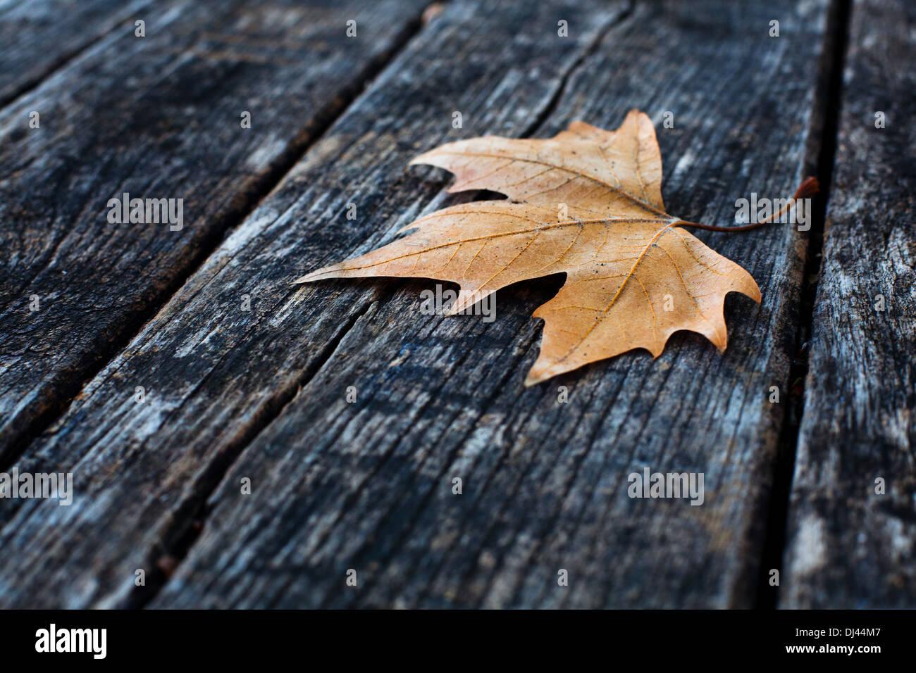 l'automne Banque D'Images