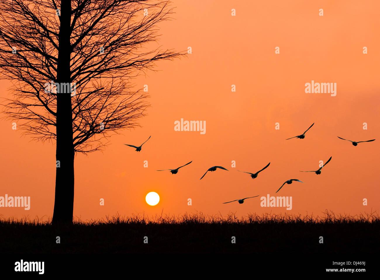 Des oiseaux volent au soleil. Photo Stock