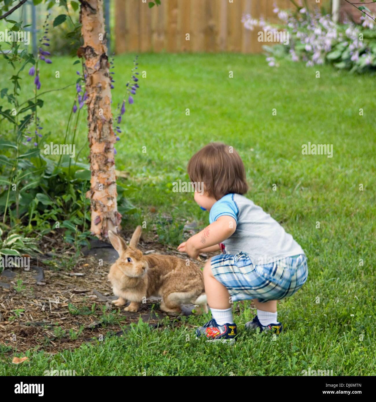 Tout-petit lapin domestique de ferme en banlieue de Yard Photo Stock