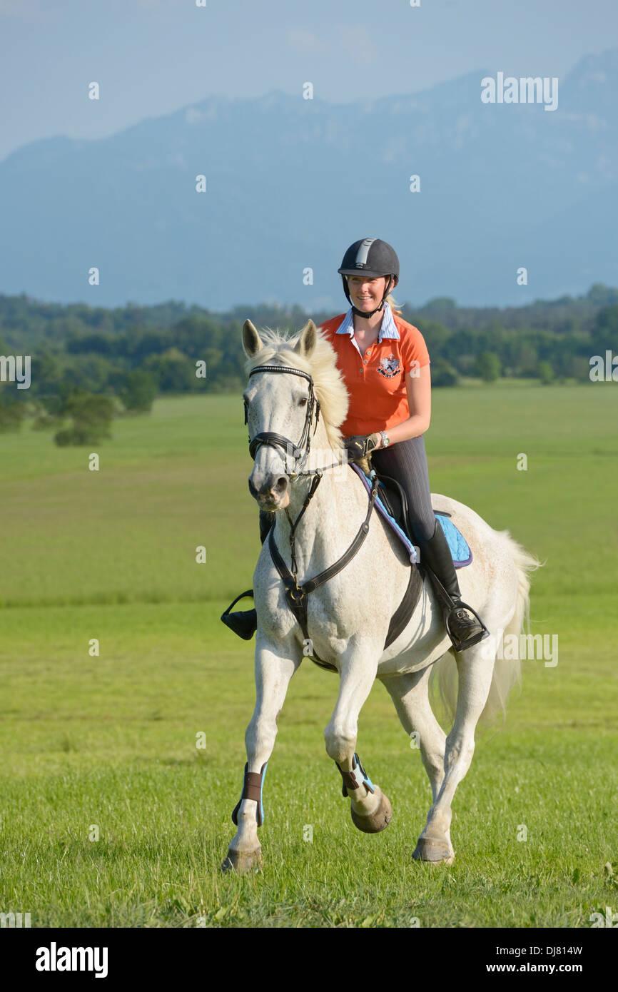 Cavalier au dos d'un gray 21 ans cheval au galop Holstein Photo Stock