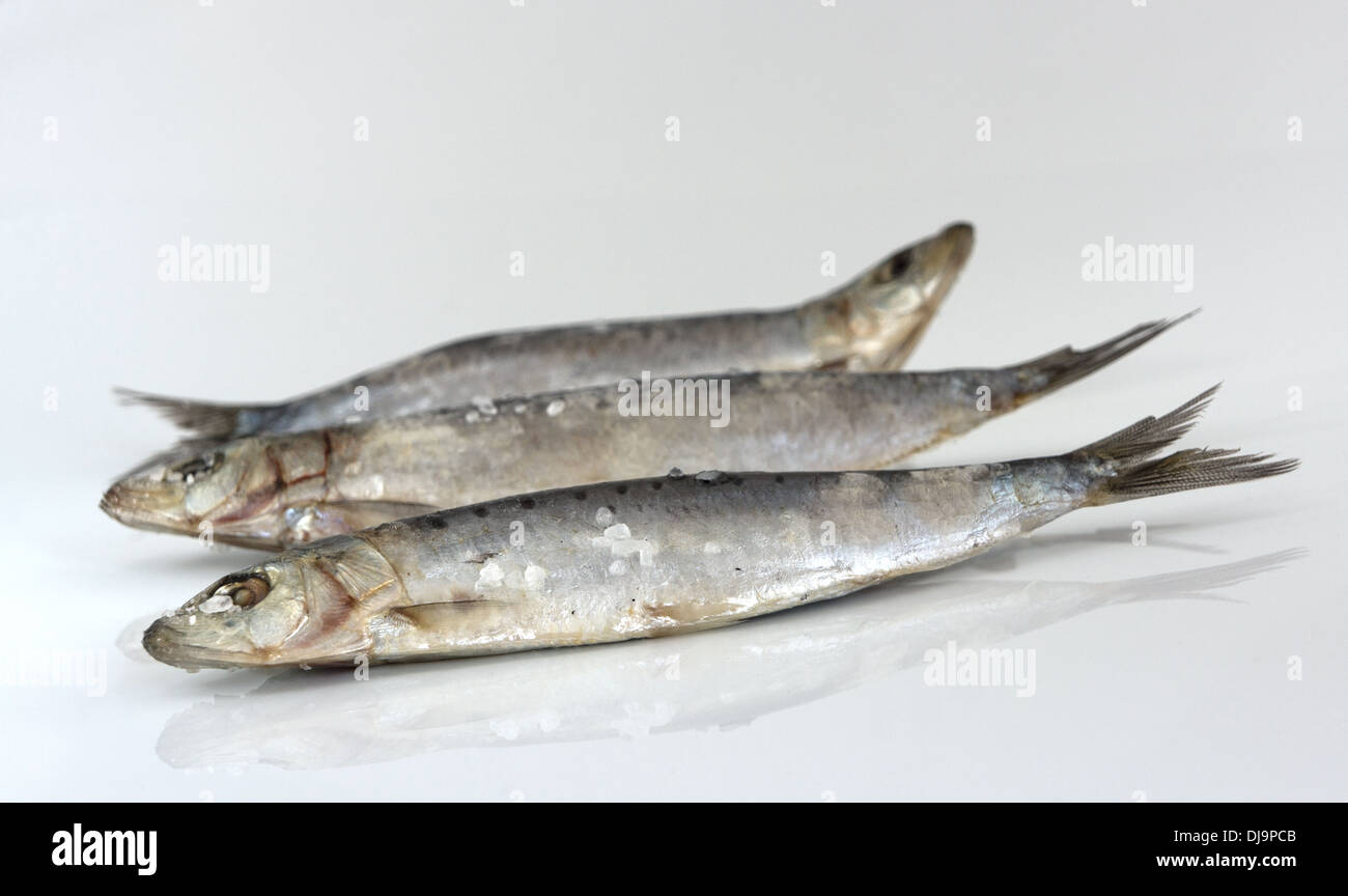 Trois matières de sardines avec du sel. Focus sélectif. Photo Stock