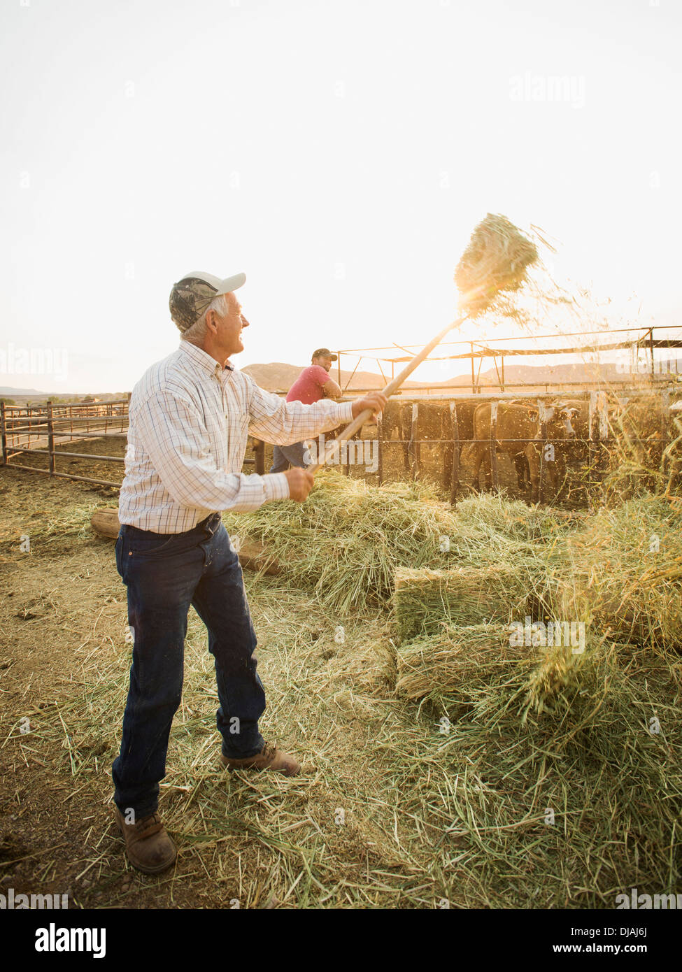 Caucasian farmers forking hay Banque D'Images