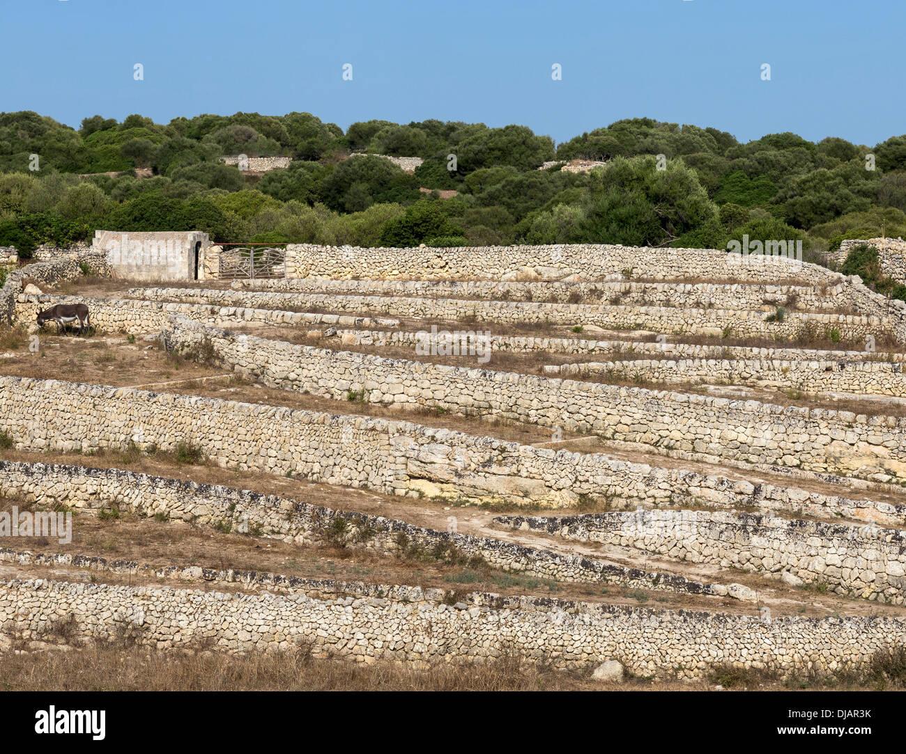 Murs de pierres sèches, pierres naturelles, Es Migjorn Gran, Minorque, Iles Baléares, Espagne Photo Stock