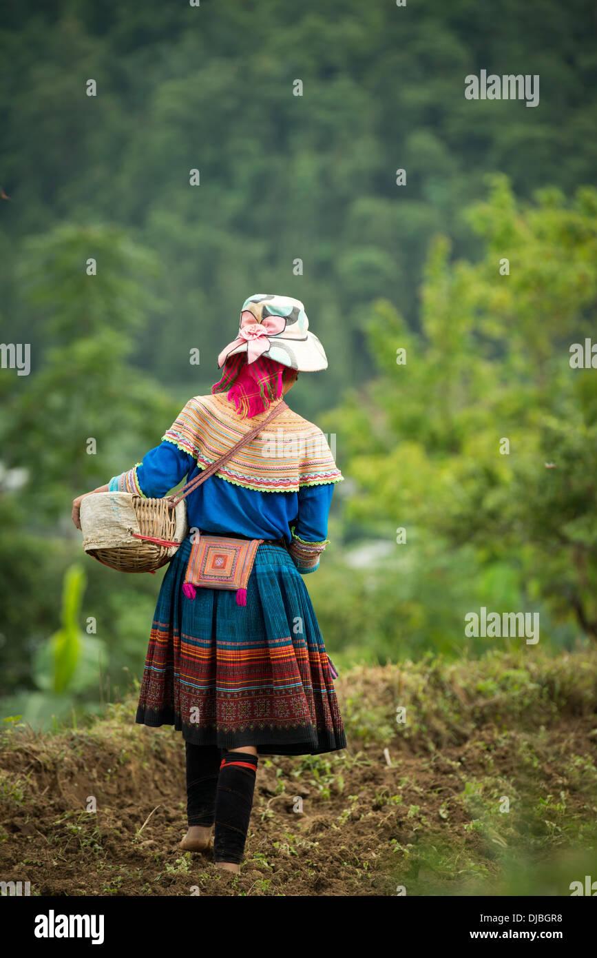 Groupe de la minorité Hmong Fleur d'ensemencement du maïs, femme Bac Ha, Lao Cai, Vietnam Photo Stock