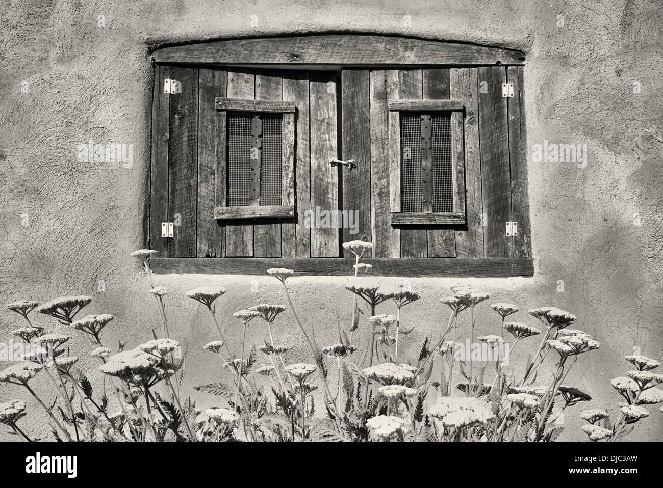 Fleurs d'achillée dans jardin avec fenêtre historique Adobe maison. Taos, Nouveau Mexique. Photo Stock