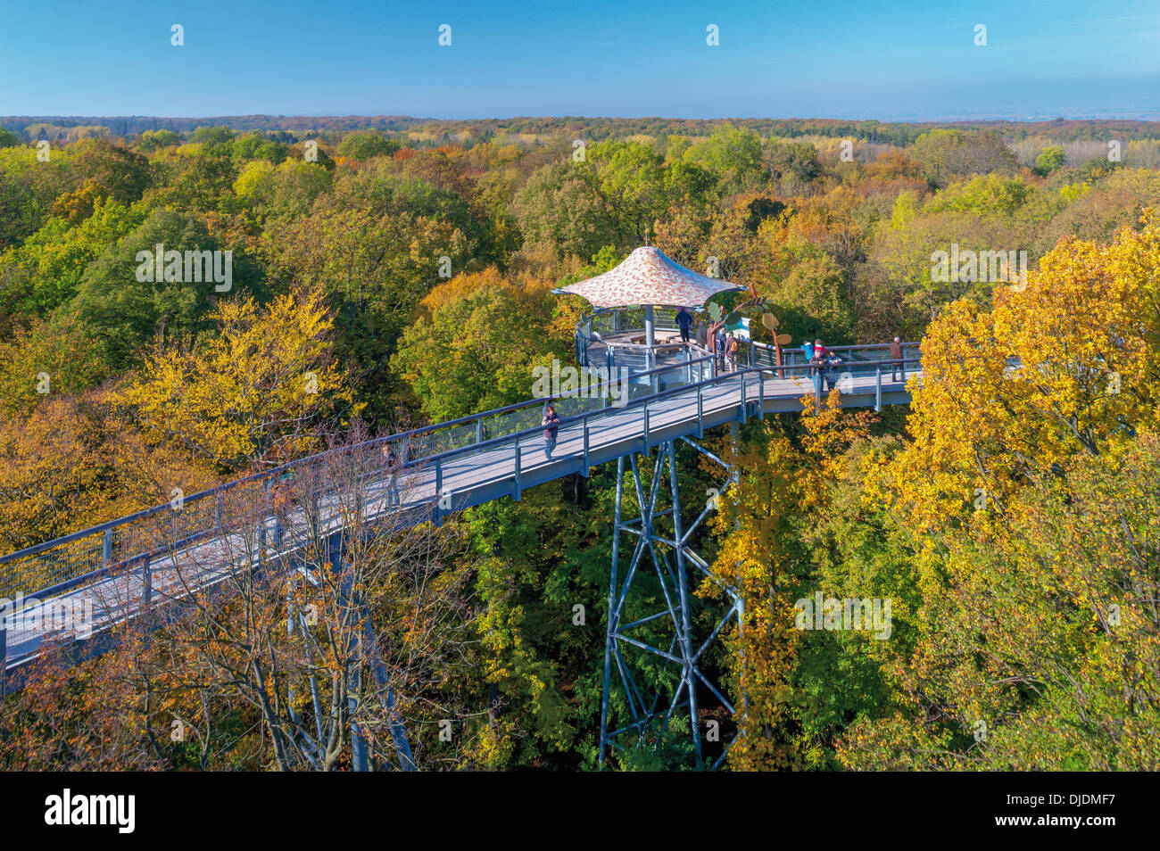 Treetop walk, Parc national du Hainich, Bad Langensalza, Thuringe, Allemagne Photo Stock