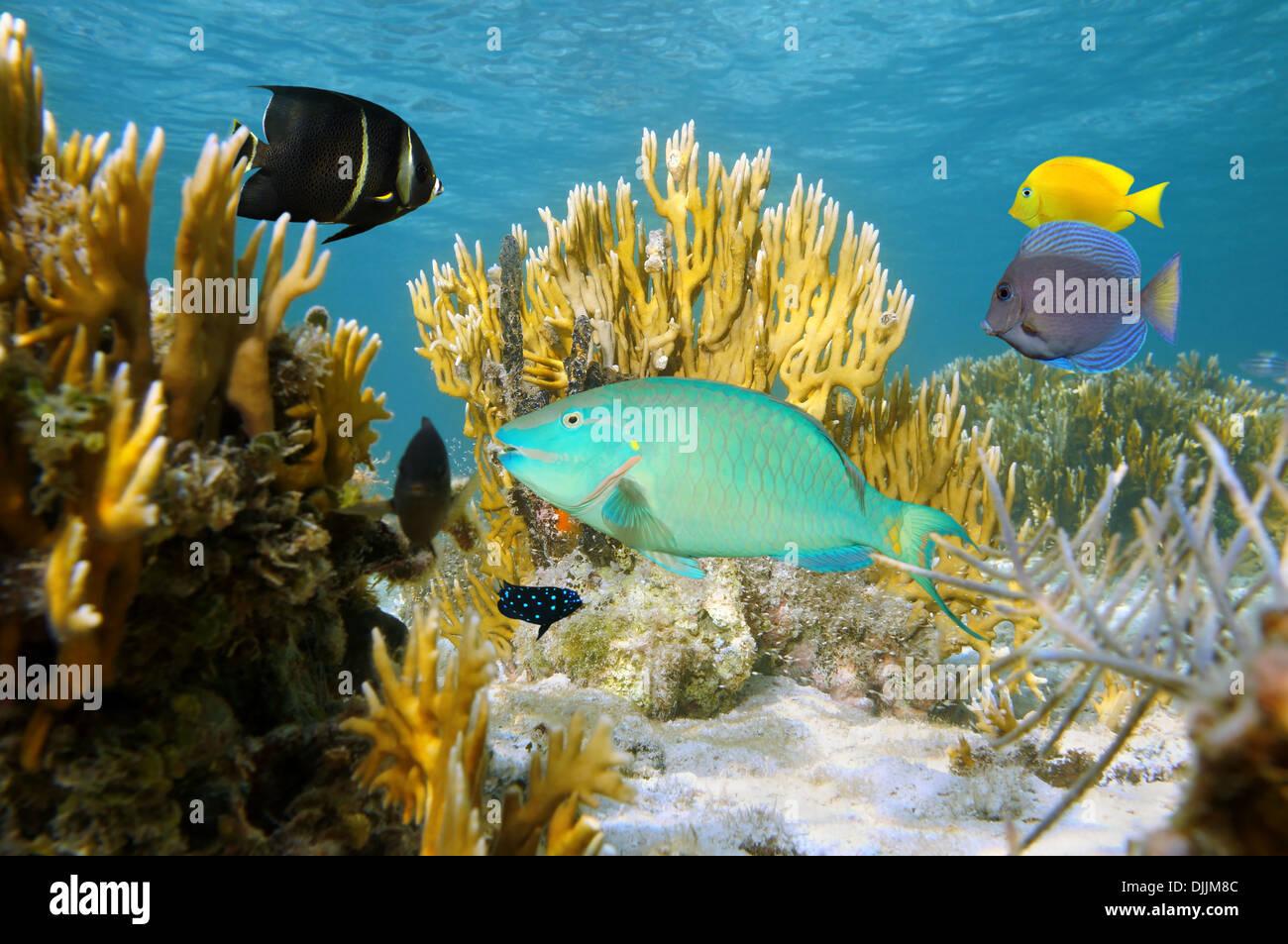 Scène sous-marine avec des poissons tropicaux colorés dans un récif de corail, de l'océan Atlantique, les îles Bahamas Photo Stock