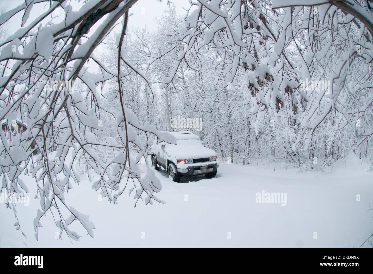 Un parking couvert de neige est assis sous un dais d'arbres couverts de neige après un blizzard Banque D'Images