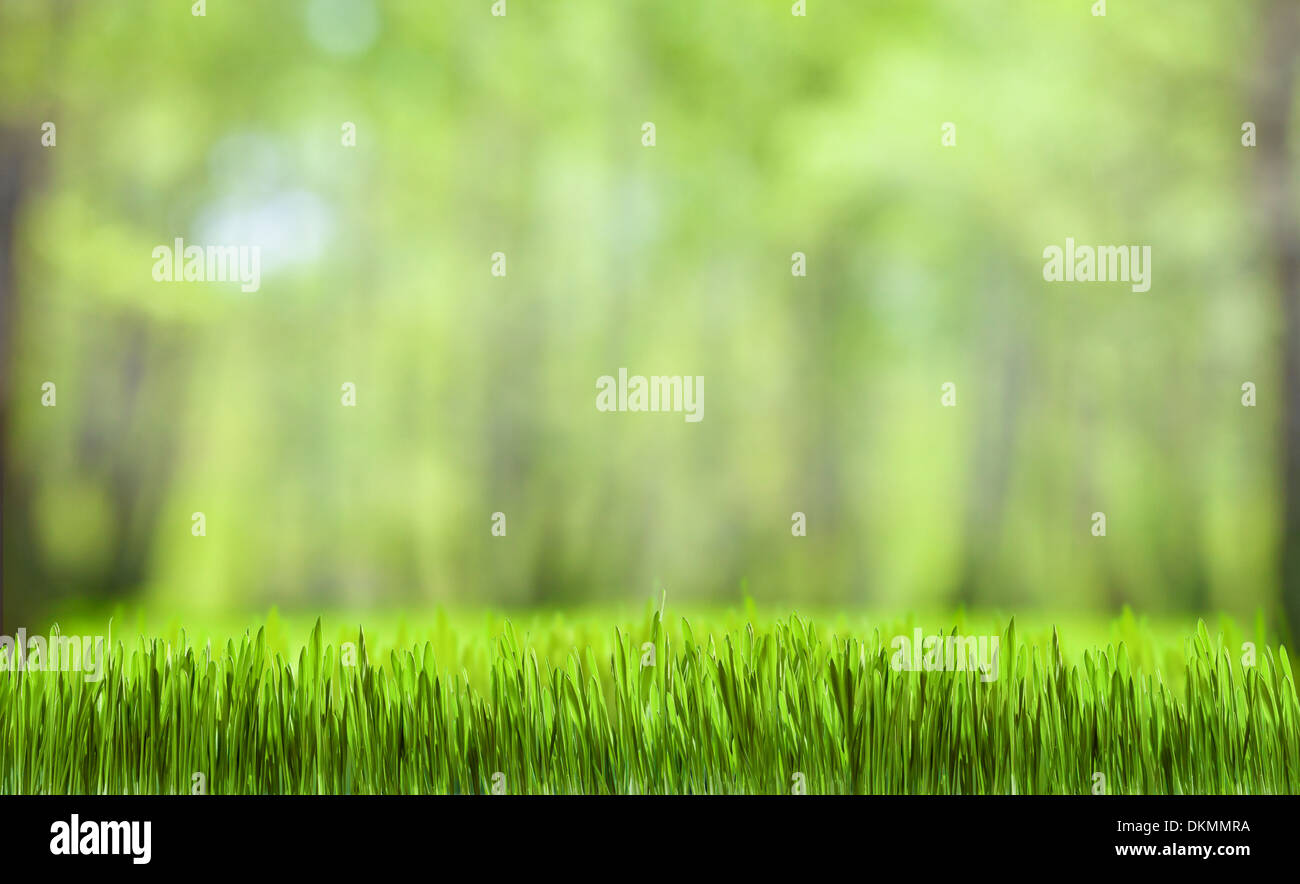 L'herbe verte et la forêt nature fond d'écran Photo Stock