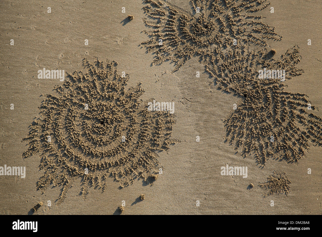 Les patrons du crabe dans le sable sur la plage de Ngapali au crépuscule, Rakhine, Myanmar (Birmanie) Photo Stock