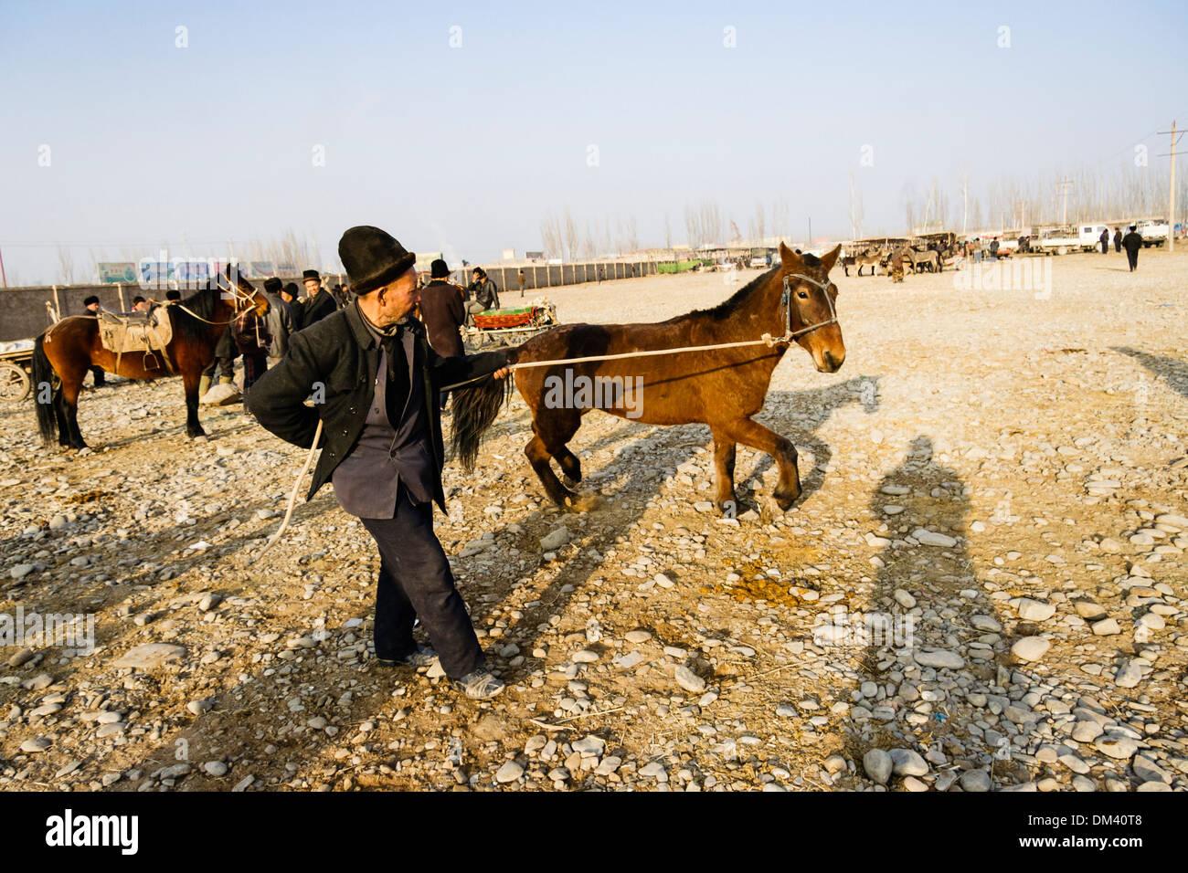 Uyghar farmer casser un colt au Mal Bazaar, le marché du bétail de Kashgar, Xinjiang, Chine Photo Stock