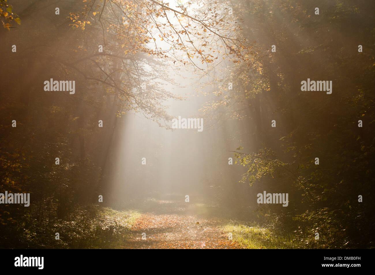 Les rayons du soleil dans une forêt d'automne Photo Stock