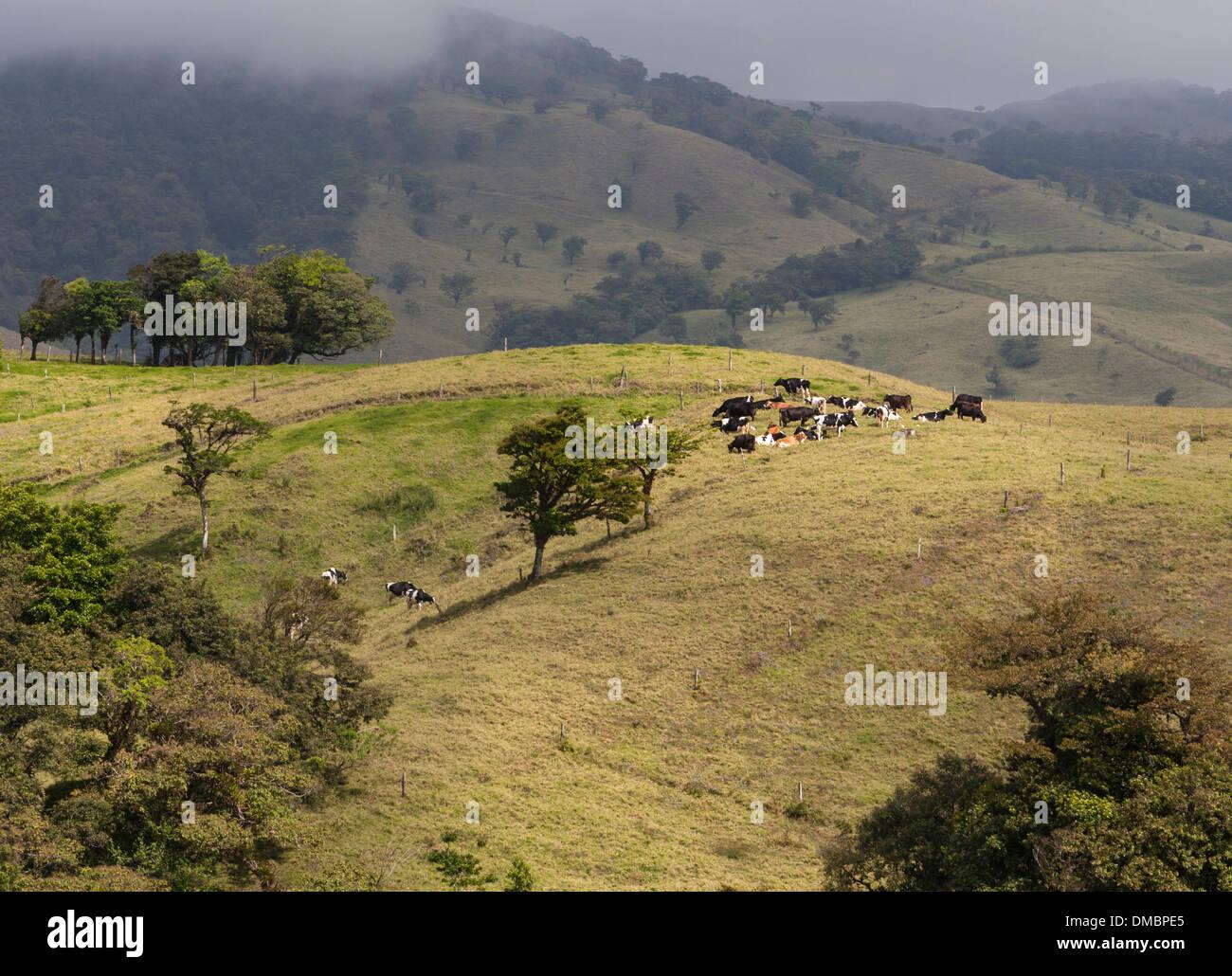 Terres agricoles vallonnées et pâturage pâturage au Costa Rica, près de San Jose, la capitale. Photo Stock