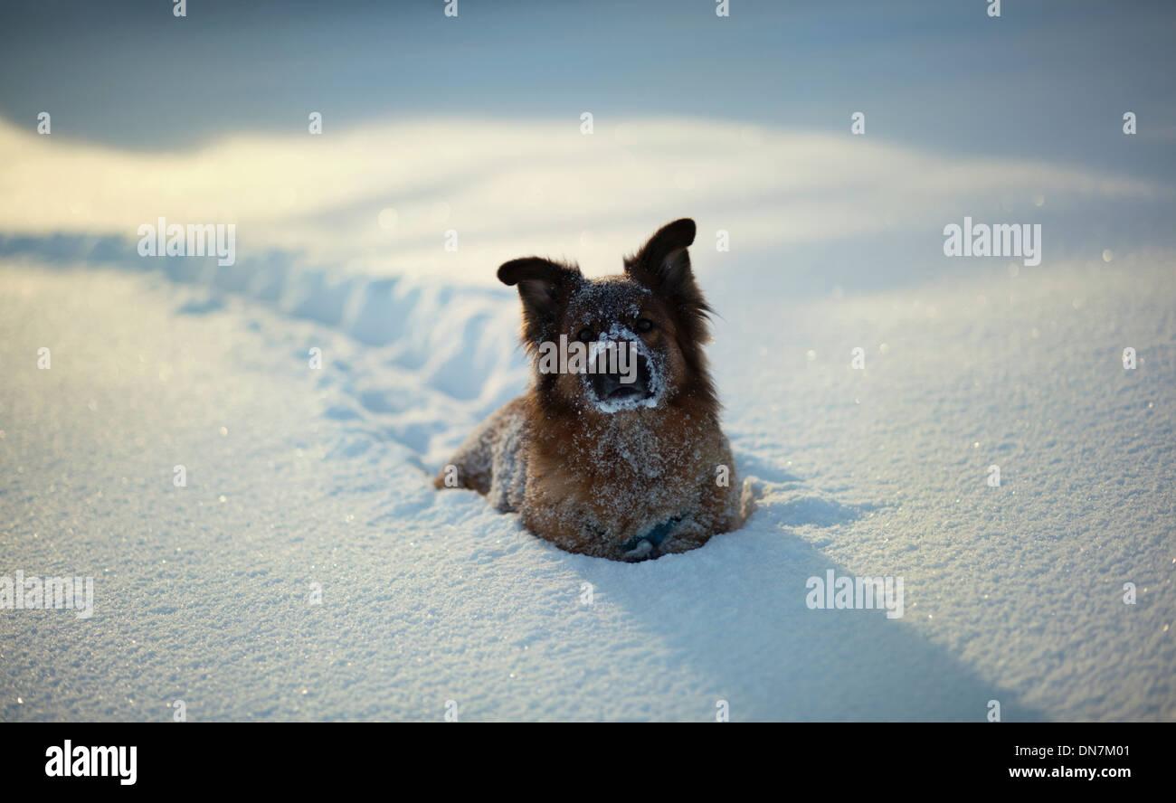 Chien dans la neige Photo Stock
